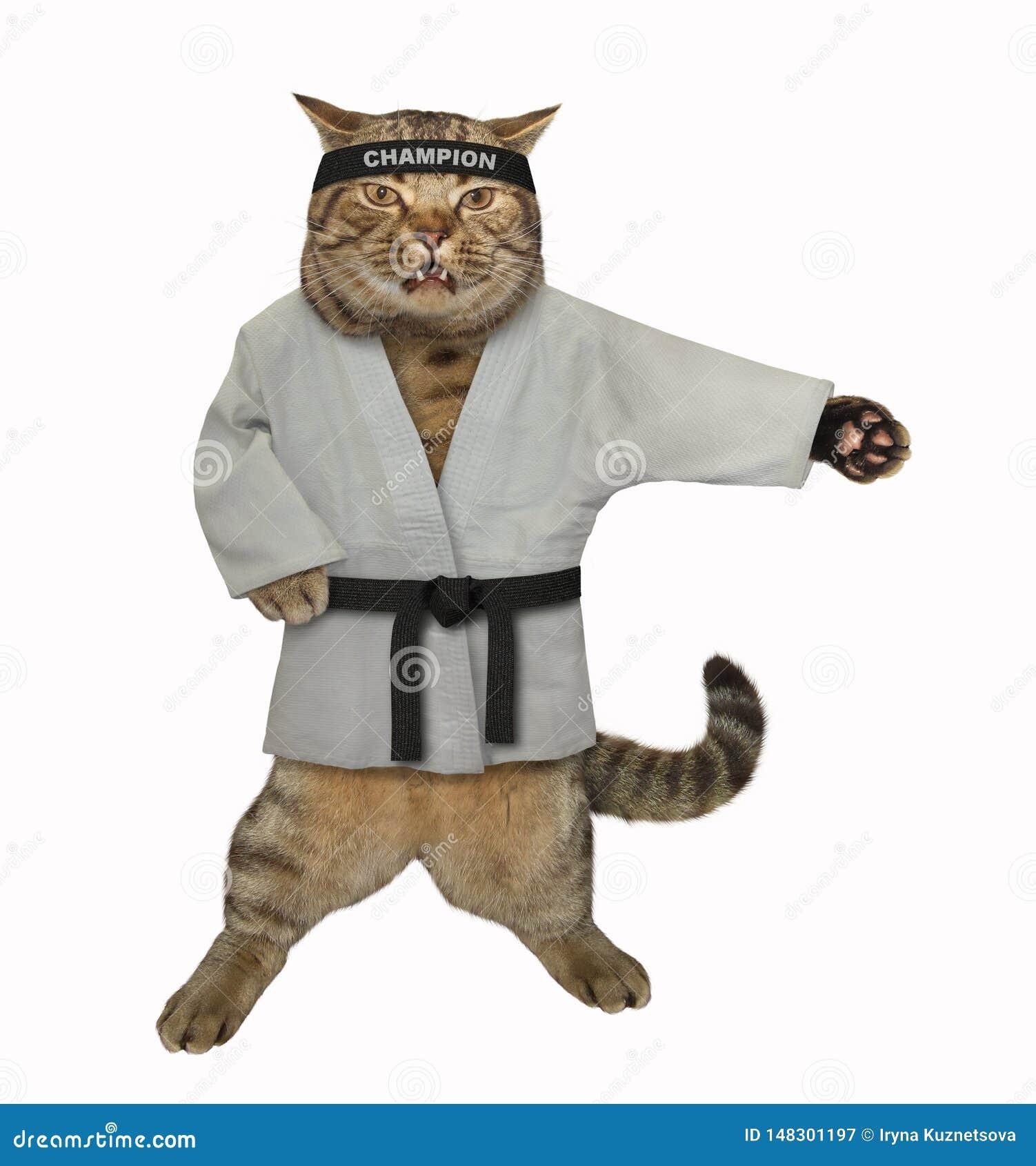 Karaté de chat faisant des exercices