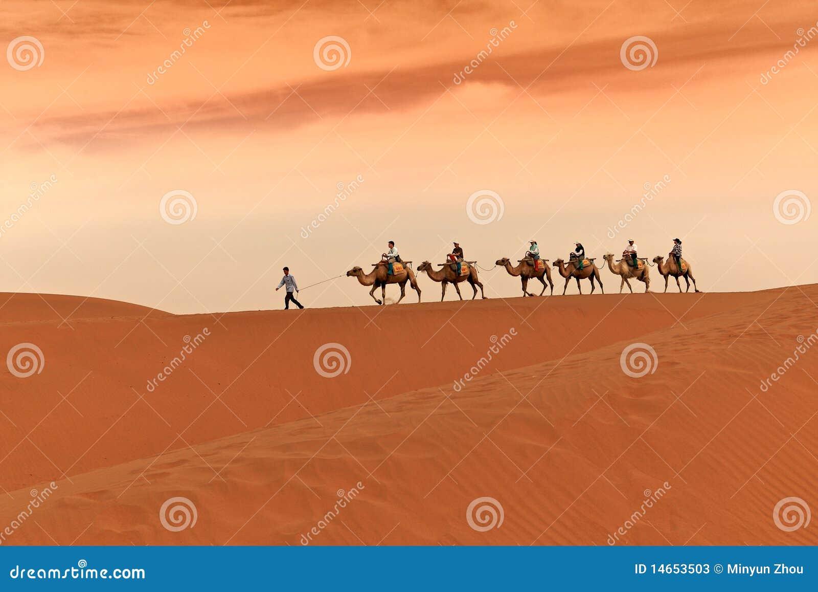 Karawany wielbłądzia pustynia