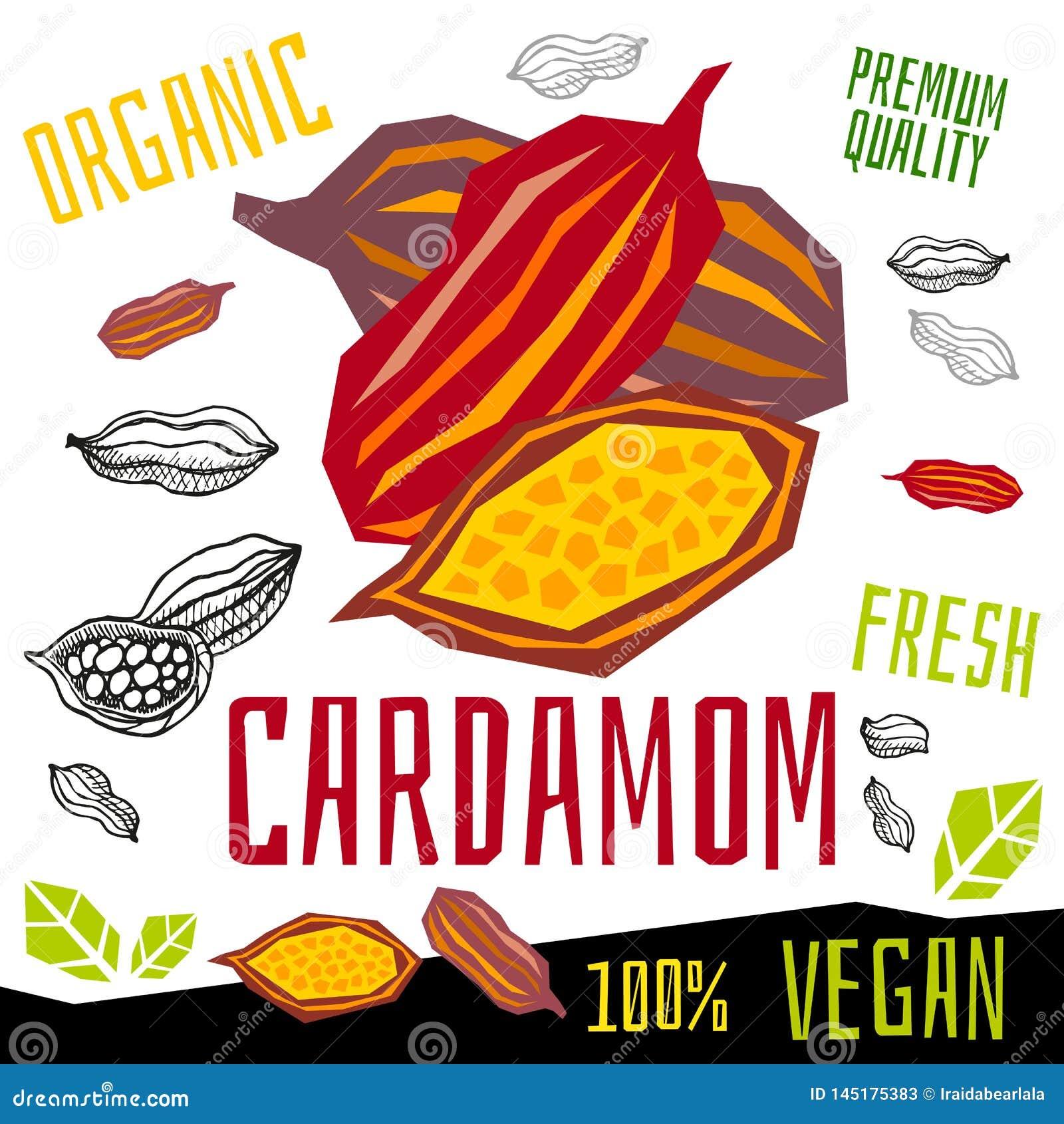 Kardamon ikony zielarskiej etykietki ?wie?y organicznie condiment, dokr?tek ziele pikantno?ci condiment koloru graficznego projek
