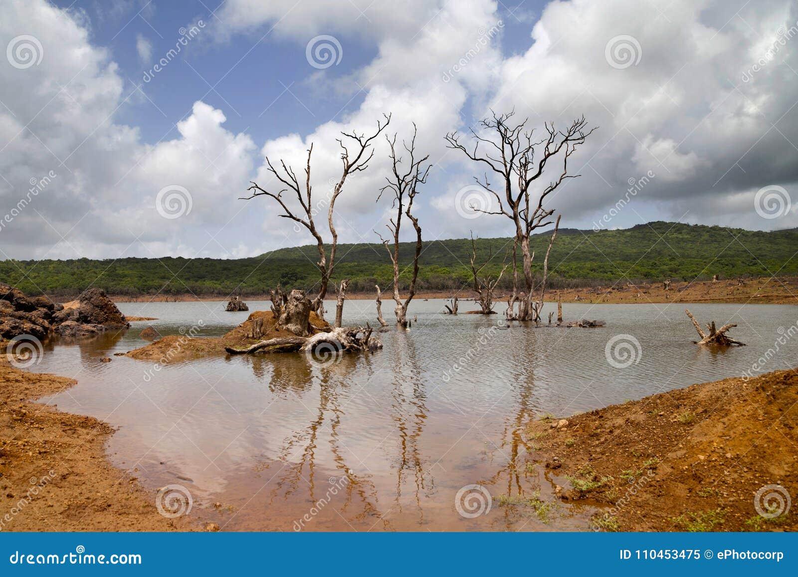 Karga träd i sjön