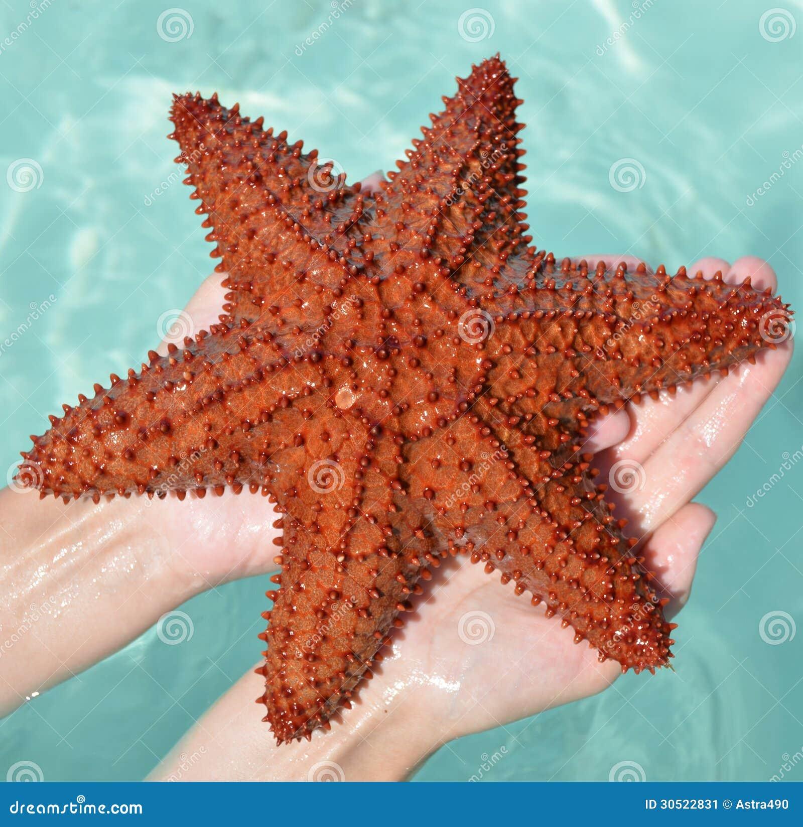 Karibische Starfish