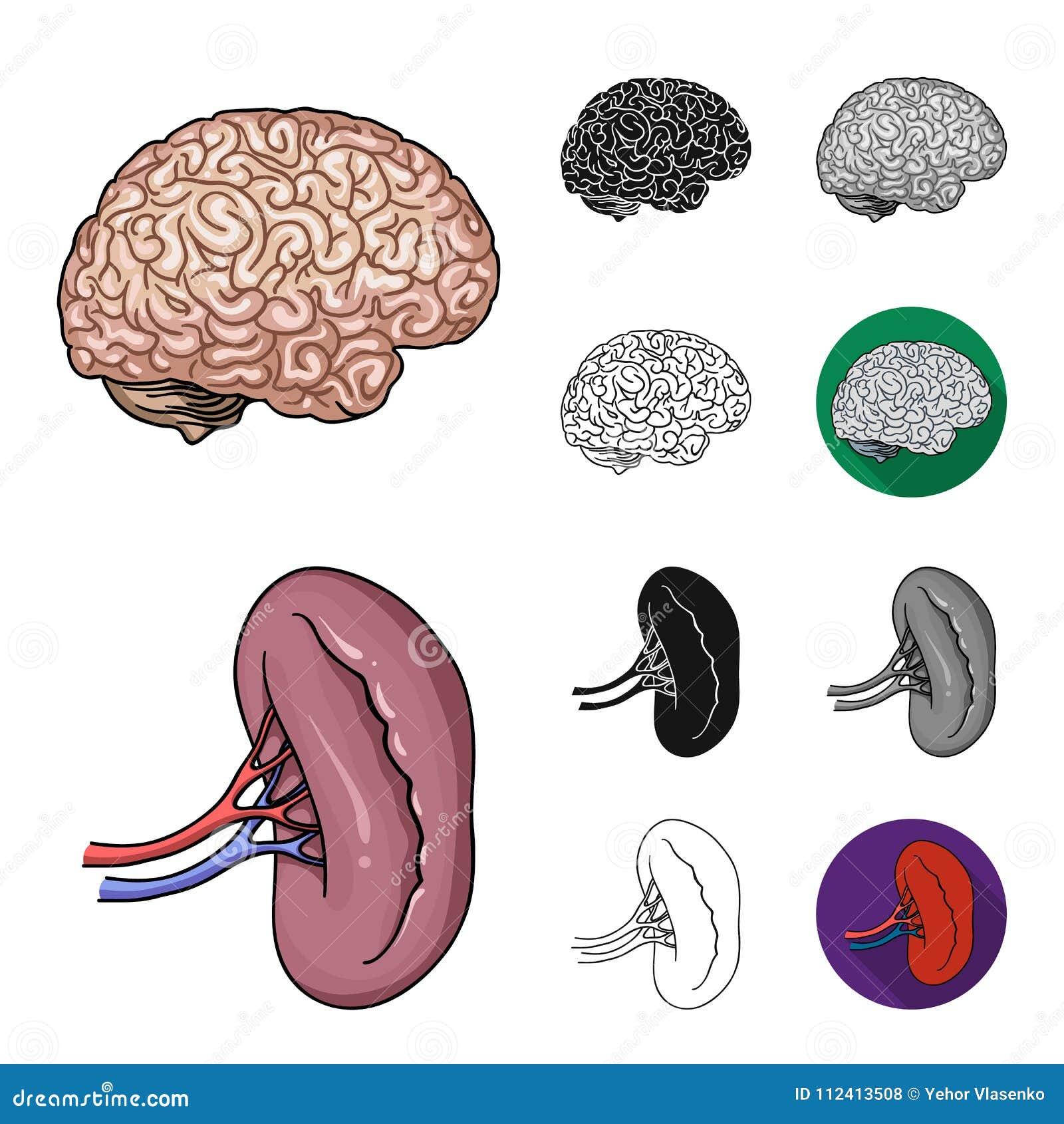 Karikatur Der Menschlichen Organe, Schwarzes, Flach, Einfarbig ...