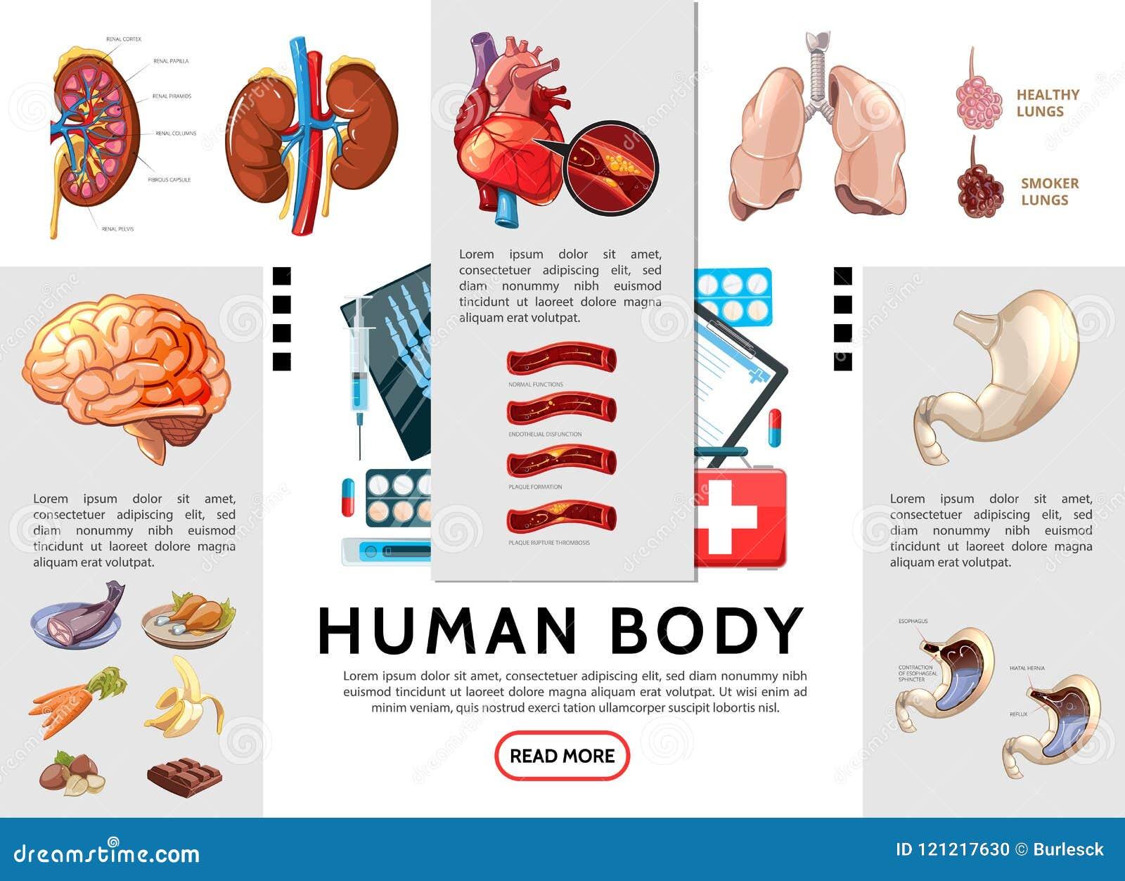 Karikatur-menschlicher Körper Infographic-Schablone