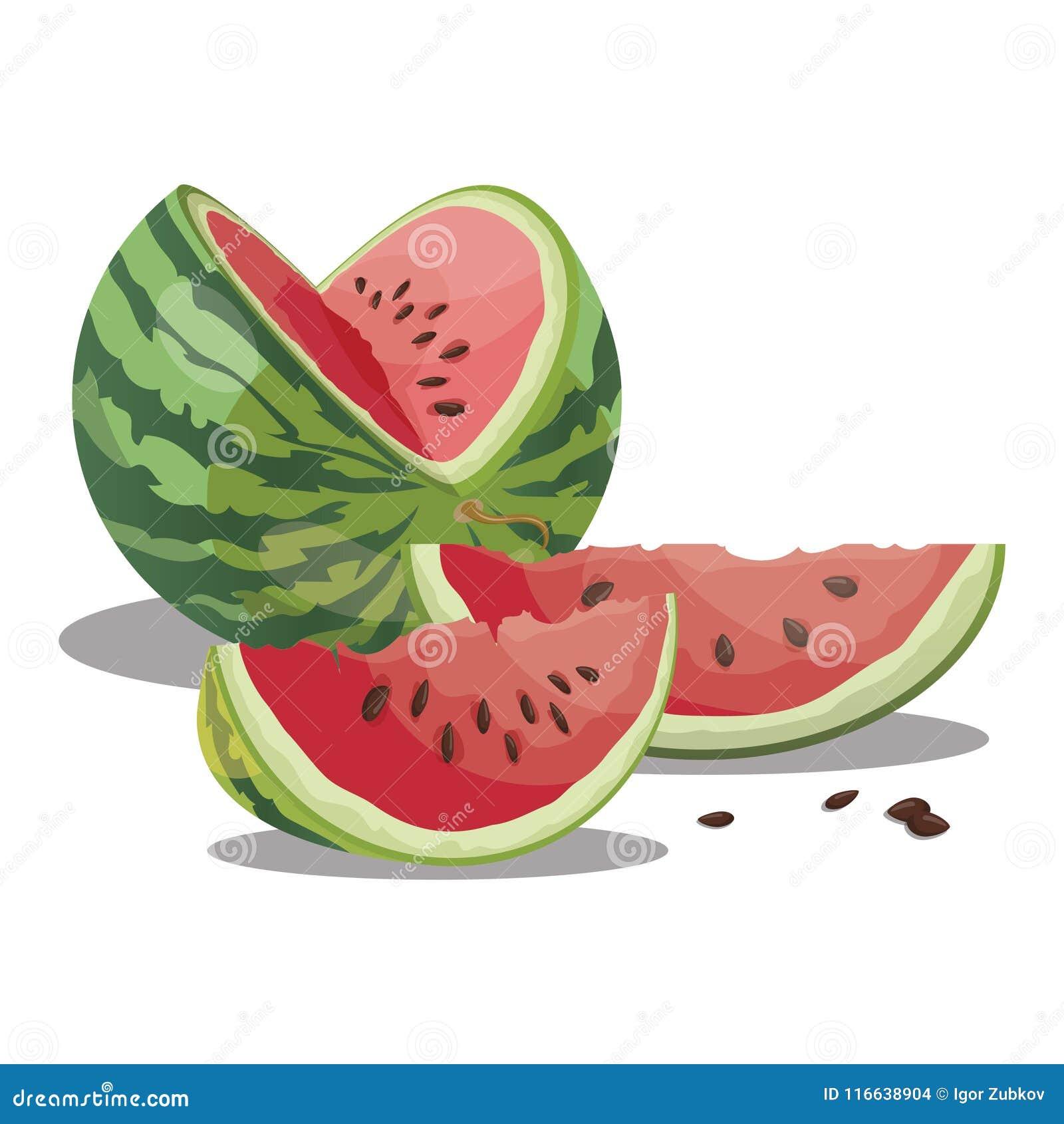 Karikaturwassermelone Geschnittene süße Wassermelone Stücke saftige Frucht Sommervitaminfrucht Abbildung für Kinder