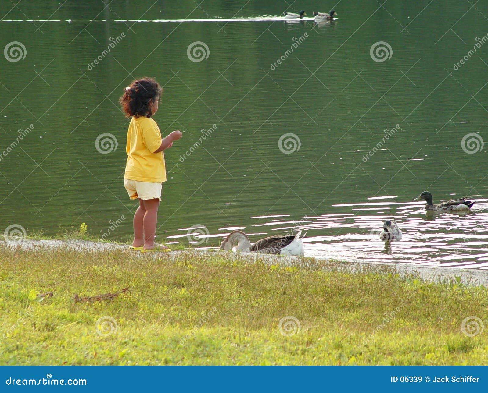 Karmić kaczki