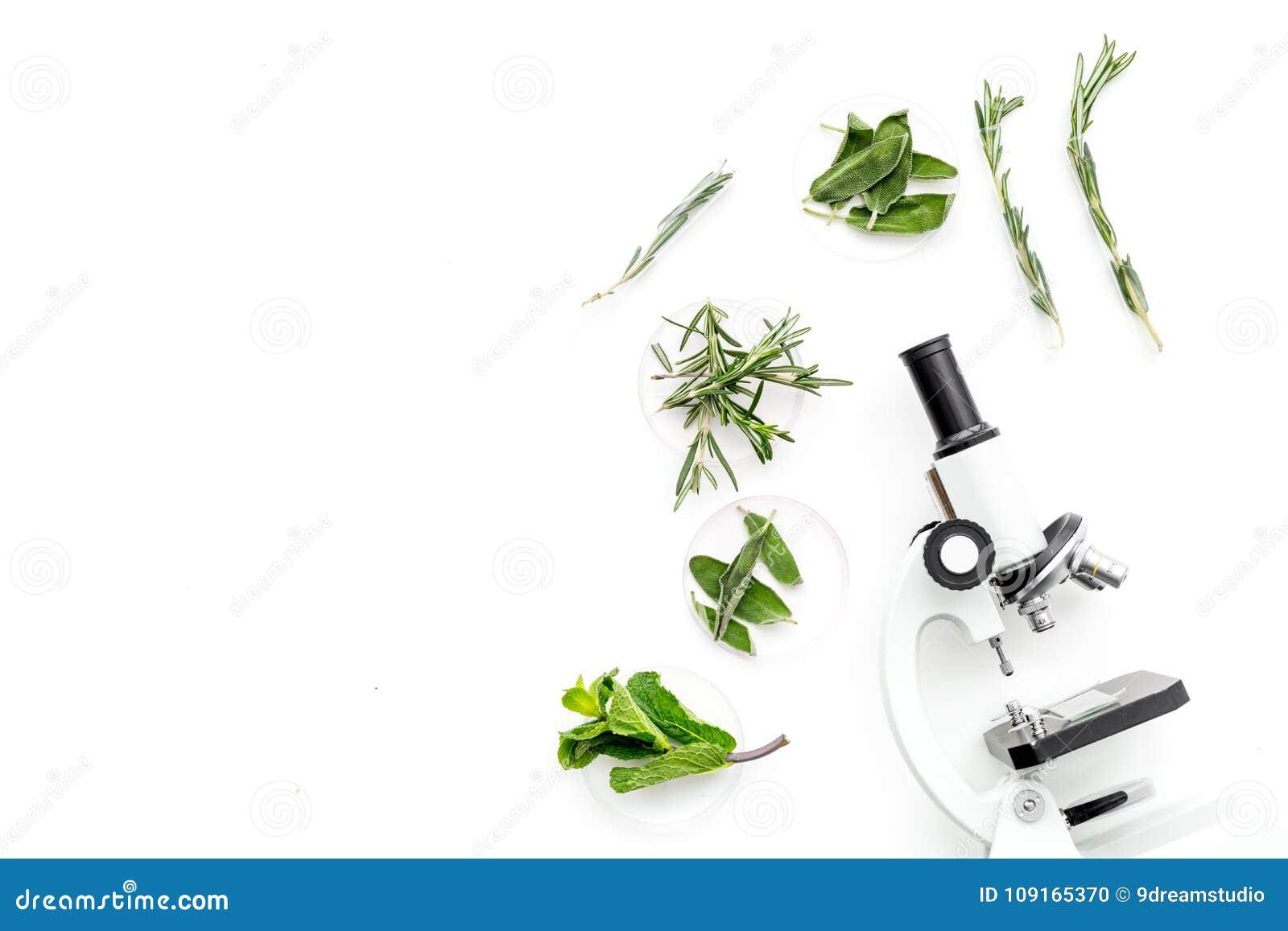 Karmowa analiza Pestycydy uwalniają warzywa Ziele rozmaryny, nowy pobliski mikroskop na białej tło odgórnego widoku kopii przestr