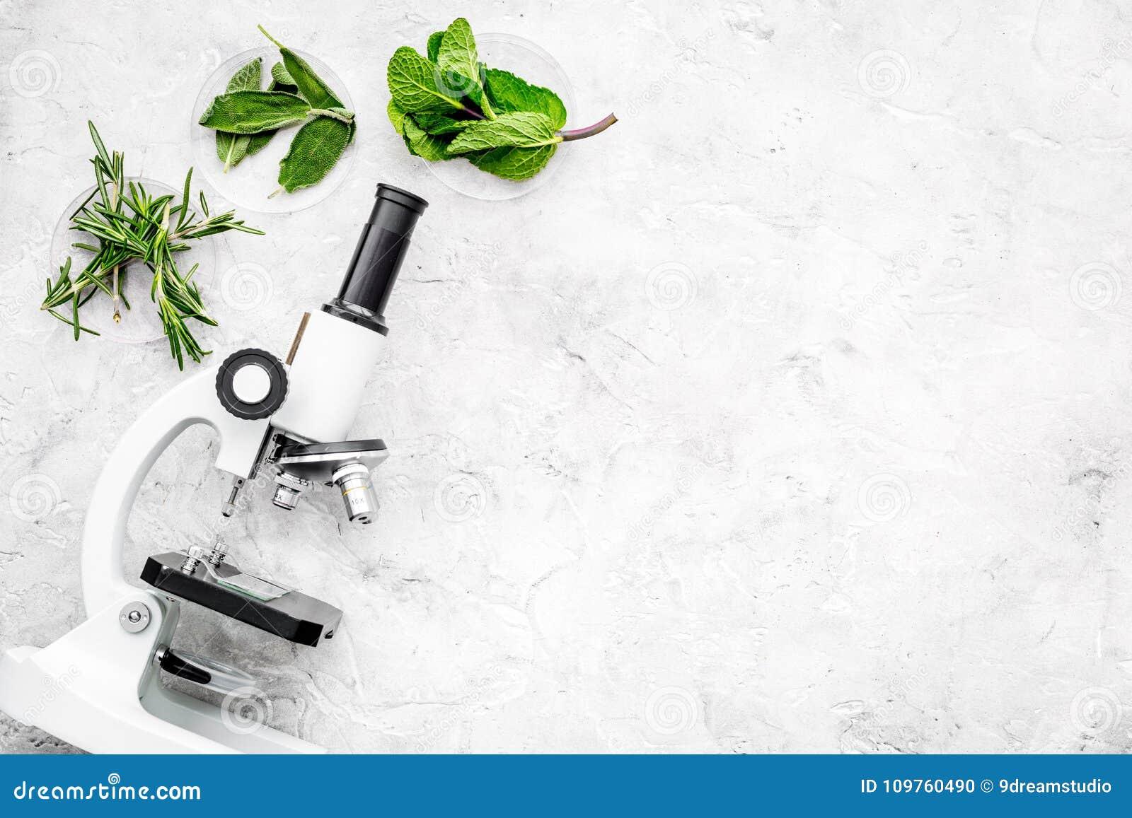 Karmowa analiza Pestycydy uwalniają warzywa Ziele rozmaryny, nowy pobliski mikroskop na popielatej tło odgórnego widoku kopii prz