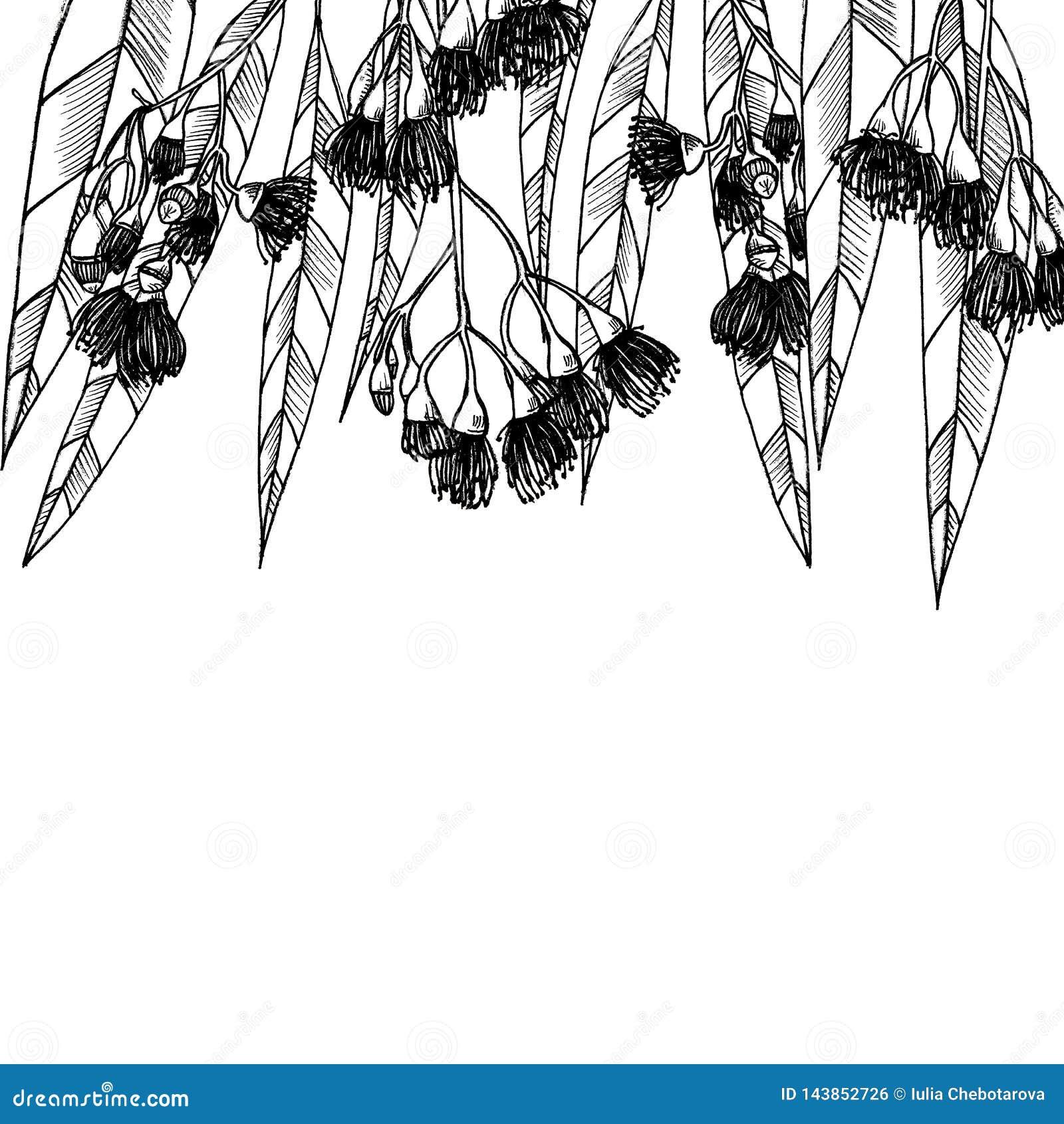 Karta z eucalipts grafit