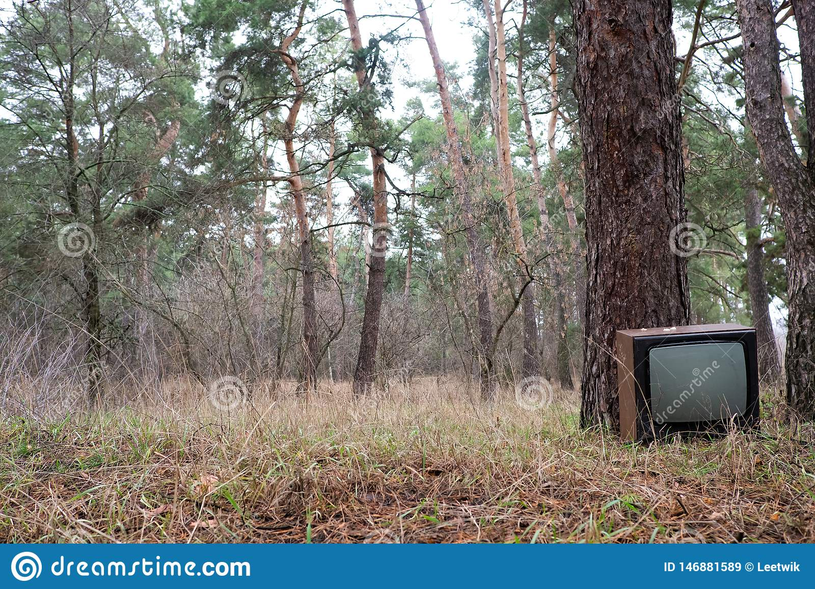 Kasserad televisionuppsättning i stiftskogen