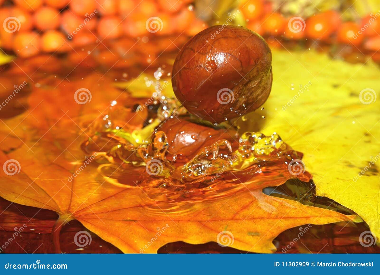 Kastanien fallen gelassen, um zu wässern.