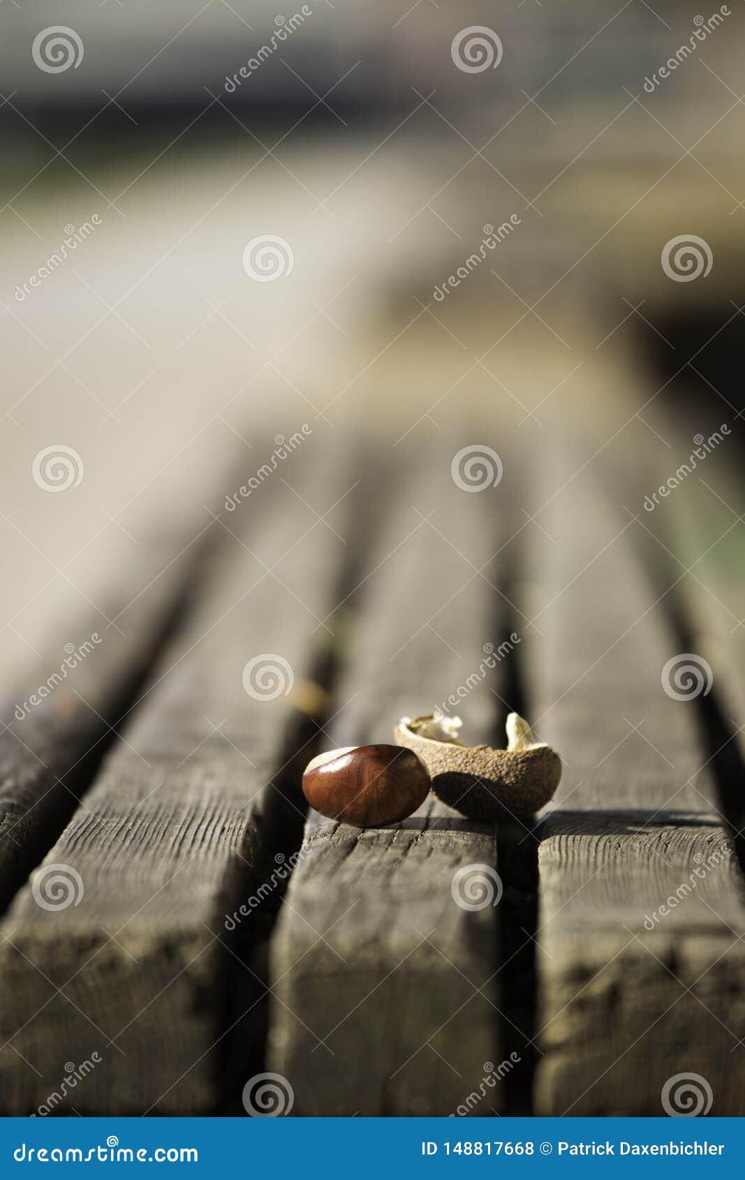 Kastanje op parkbank, de herfst