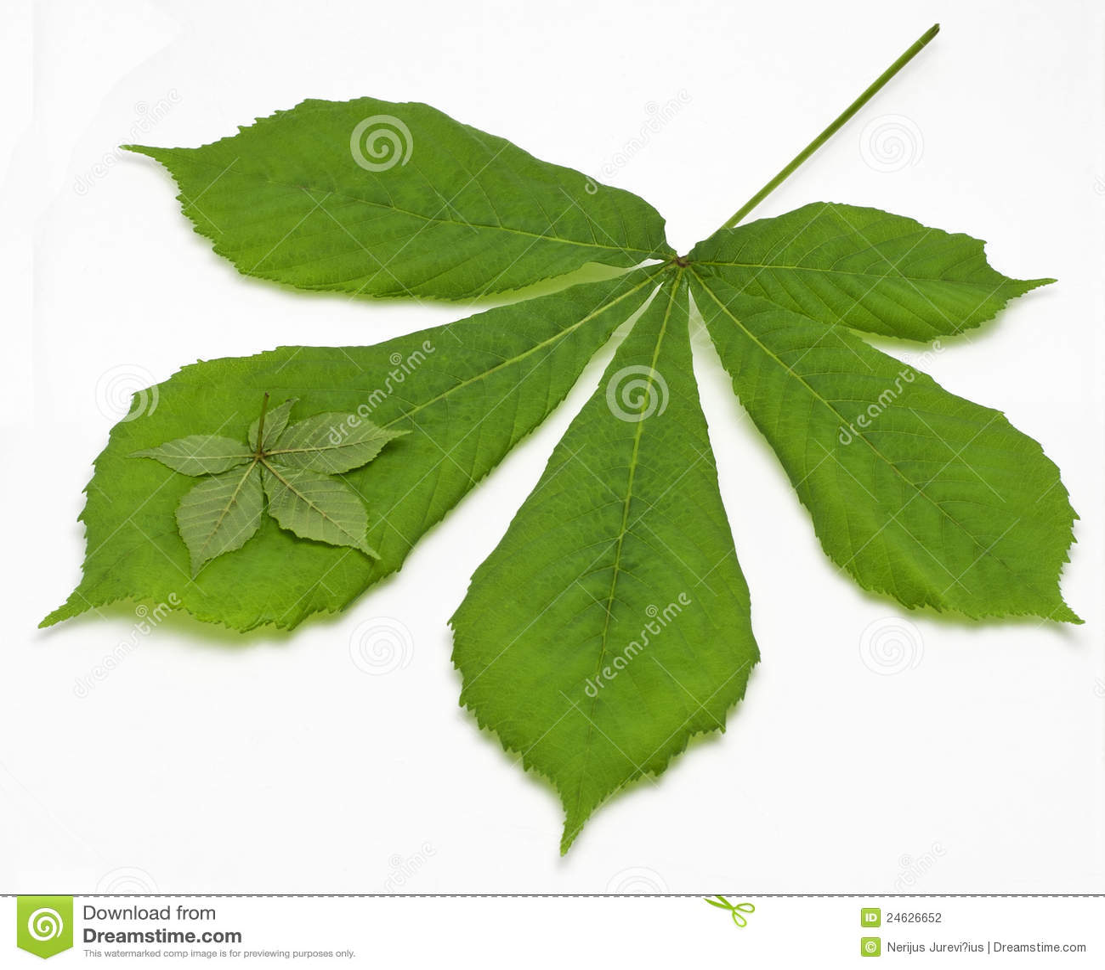 Kastanjebrun leaf två