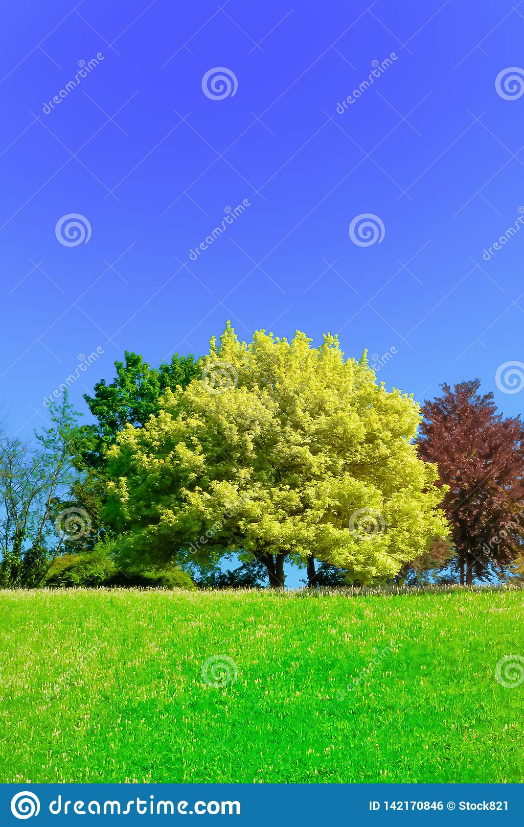 Kastanjebrun tree