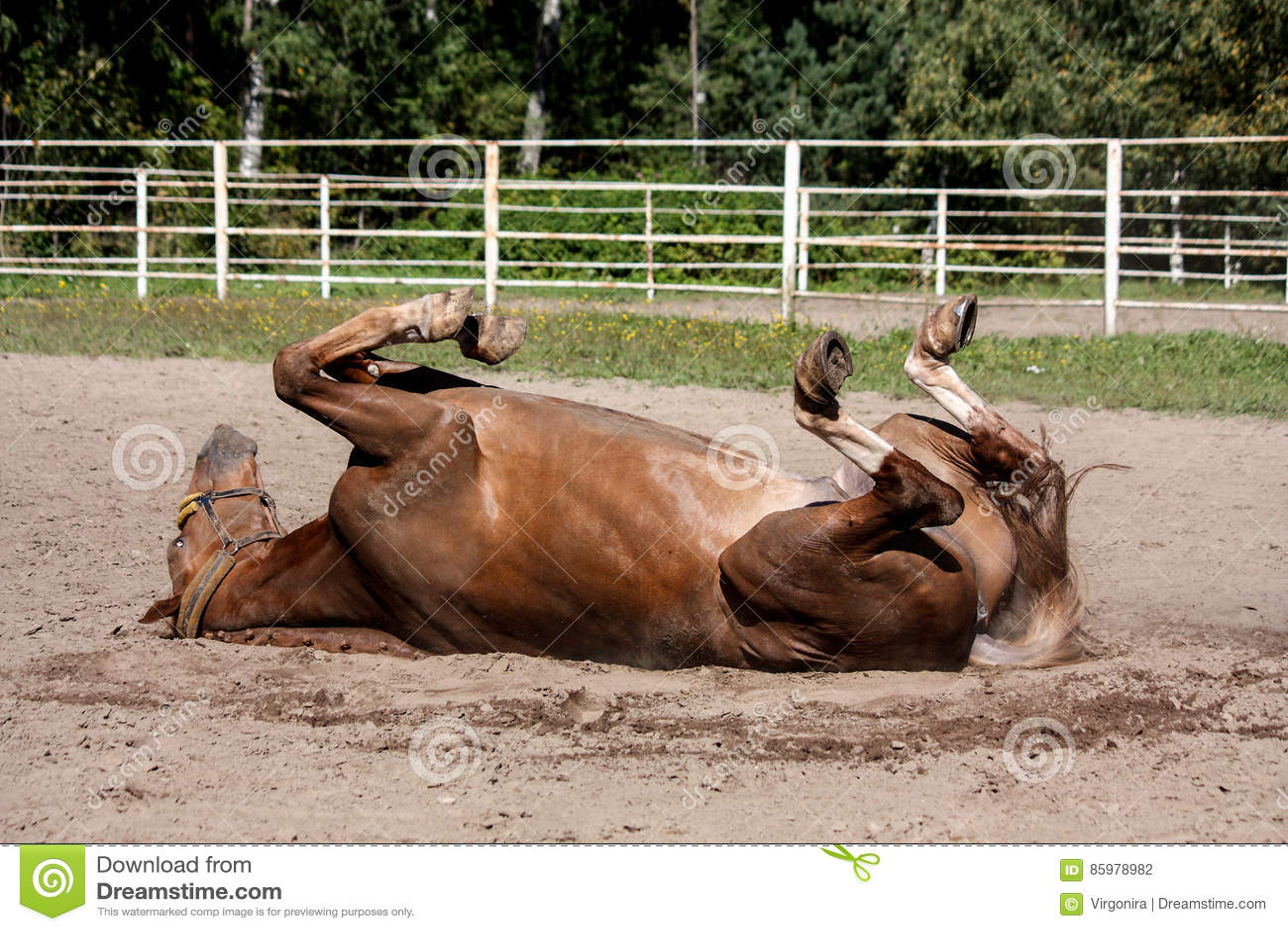 Kastanjepaard die in het zand rollen