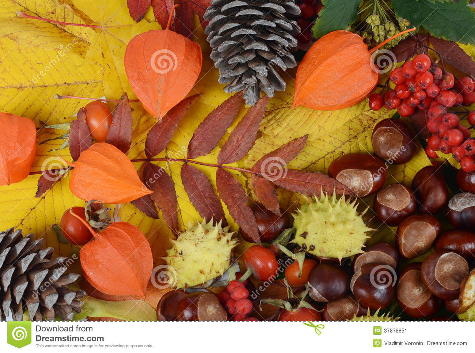 Kastanjes op de herfstbladeren