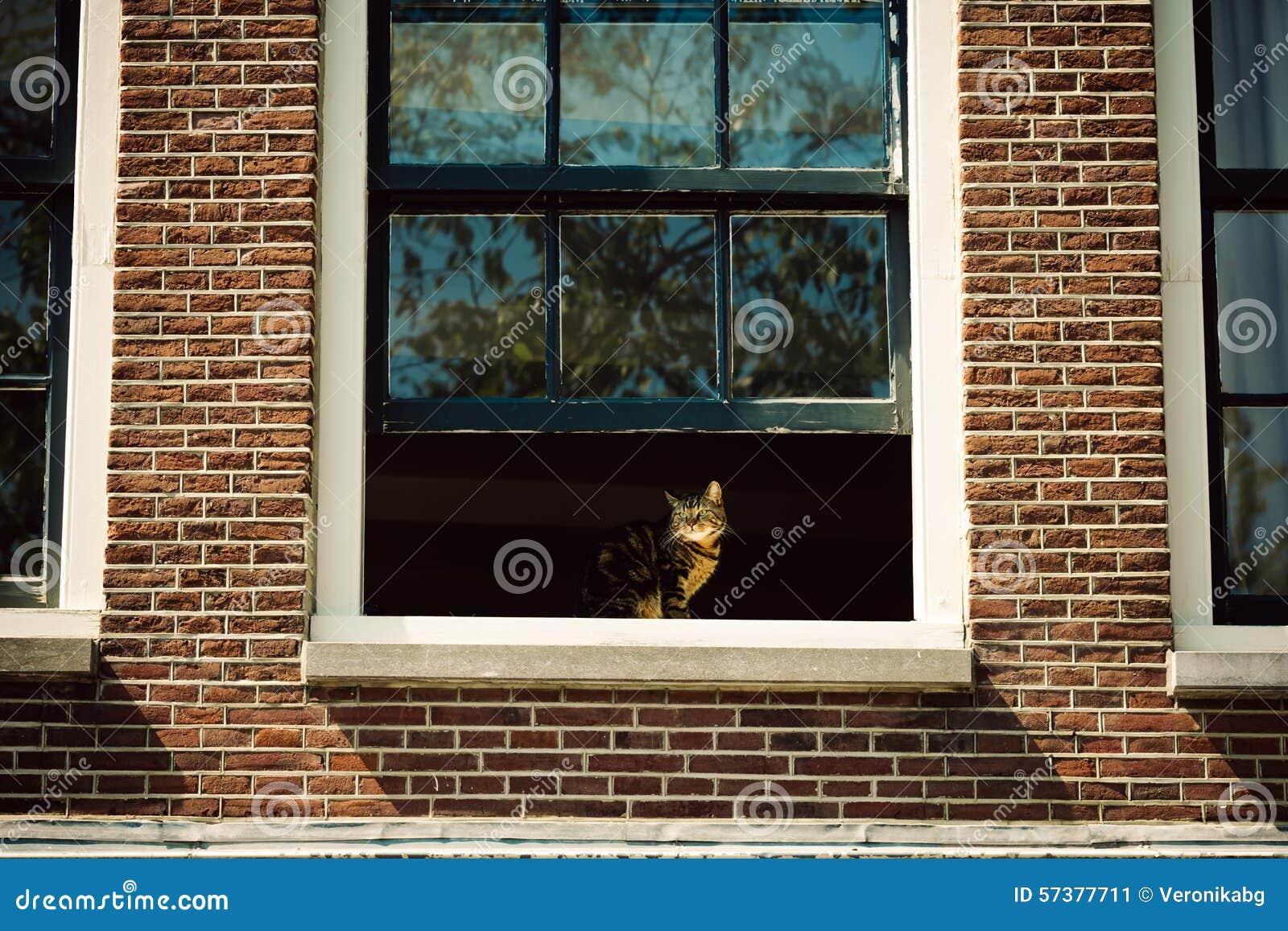 Kat bij het venster in Amsterdam, Nederland
