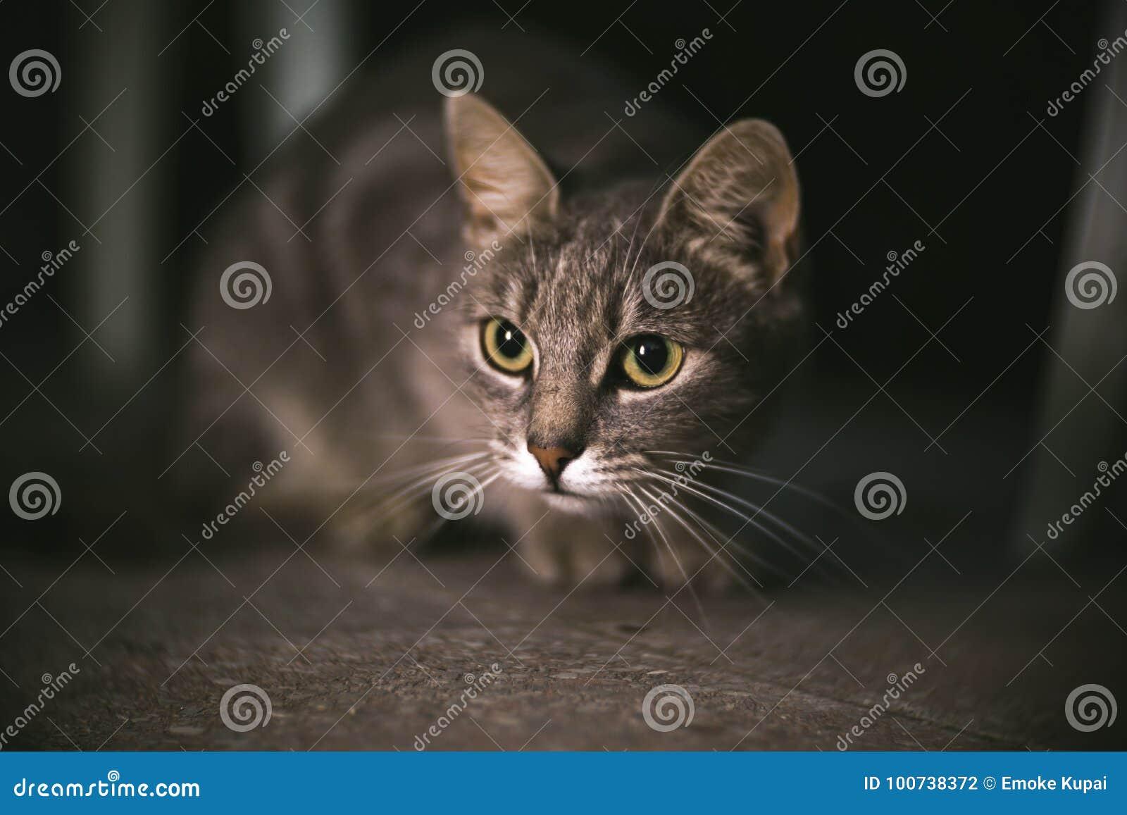 Kat bij nacht