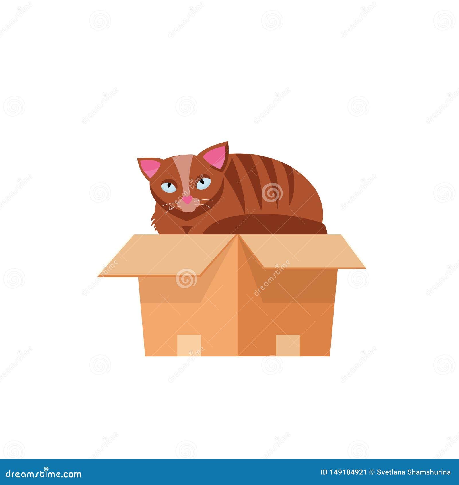 Kat in de doos Kat in een kartondoos Pot binnen kartondoos Speels nieuwsgierig kattenhuisdier die uit zijn het verbergen kijken B