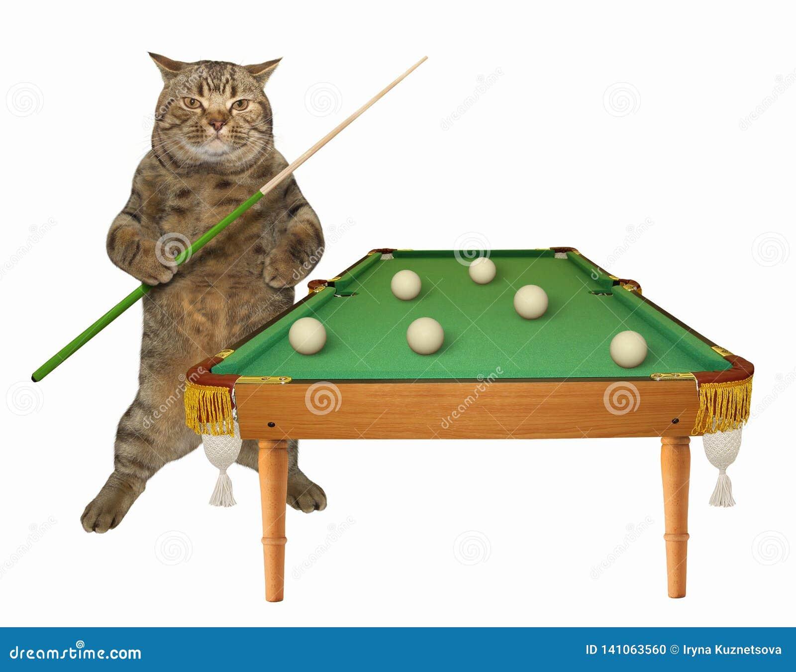 Kat dichtbij de poollijst
