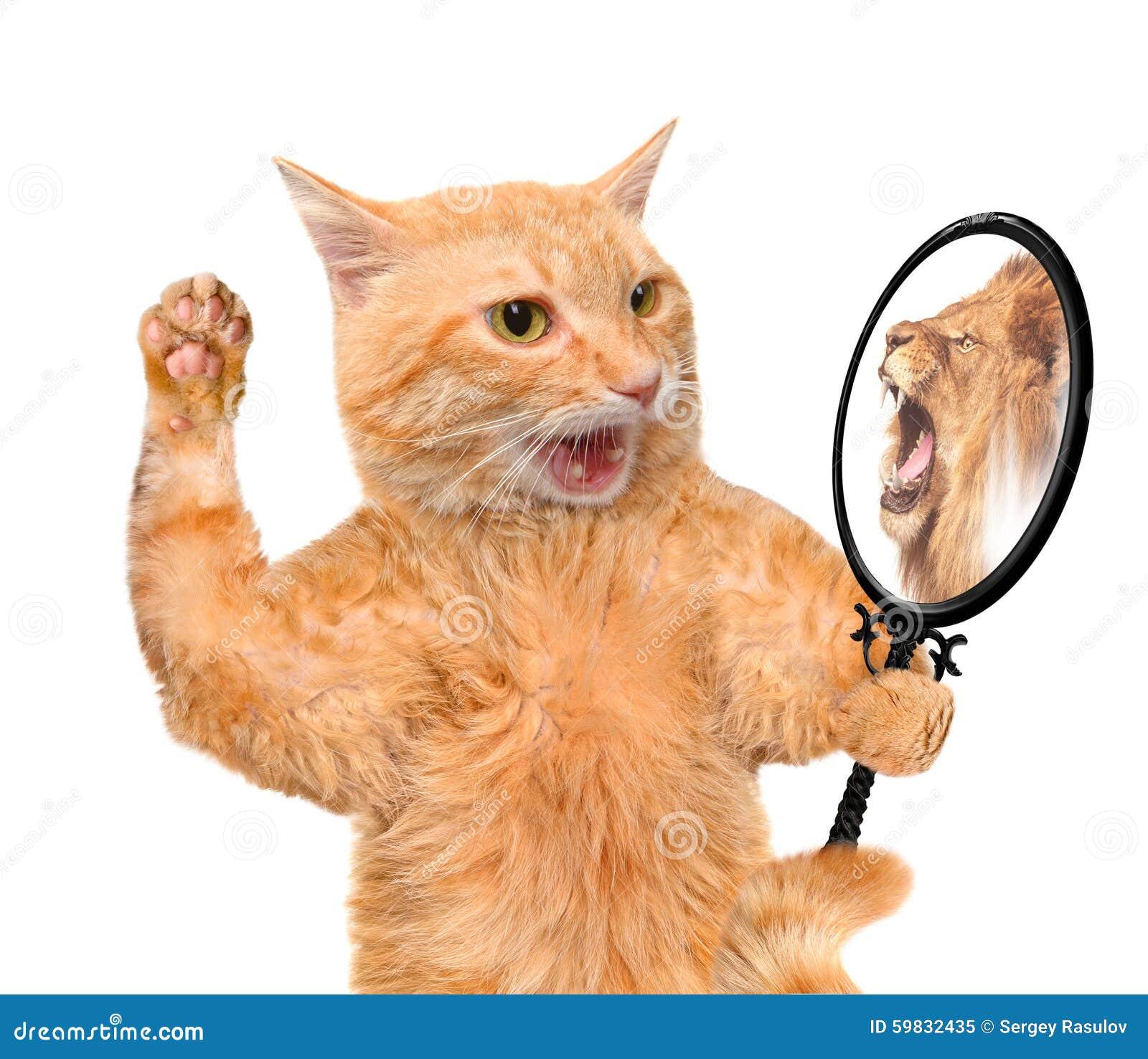 Kat die de spiegel onderzoekt en een bezinning van een leeuw ziet