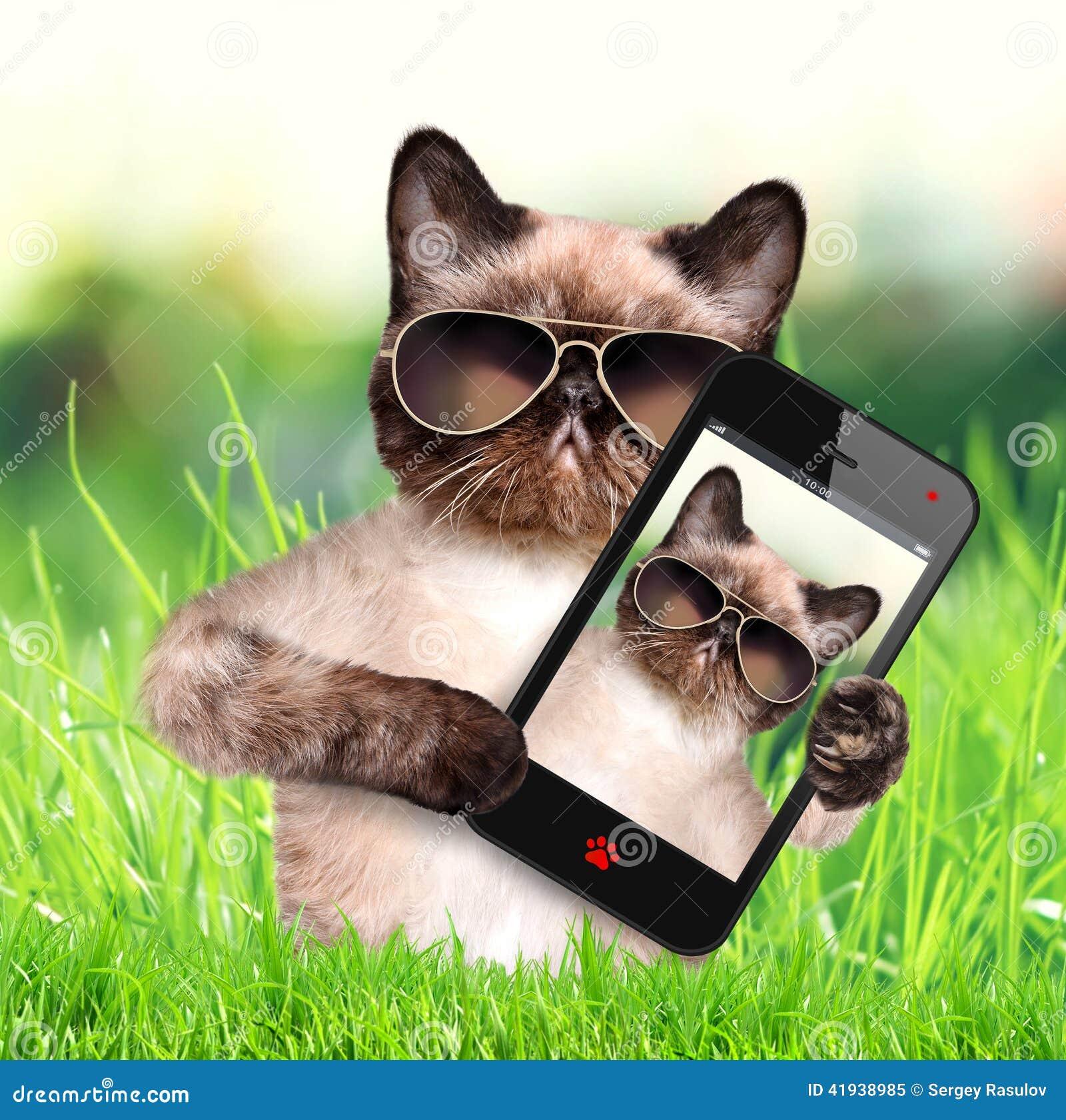 Kat die een selfie met een smartphone nemen