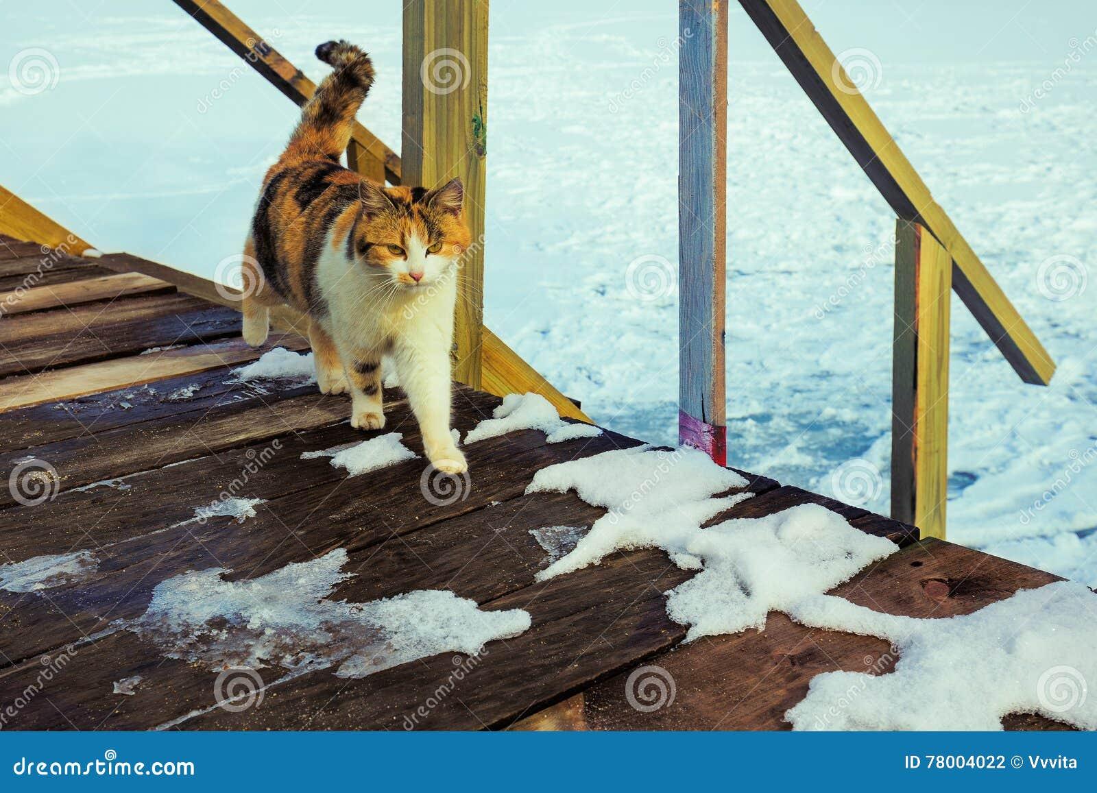 Kat die op de portiek lopen
