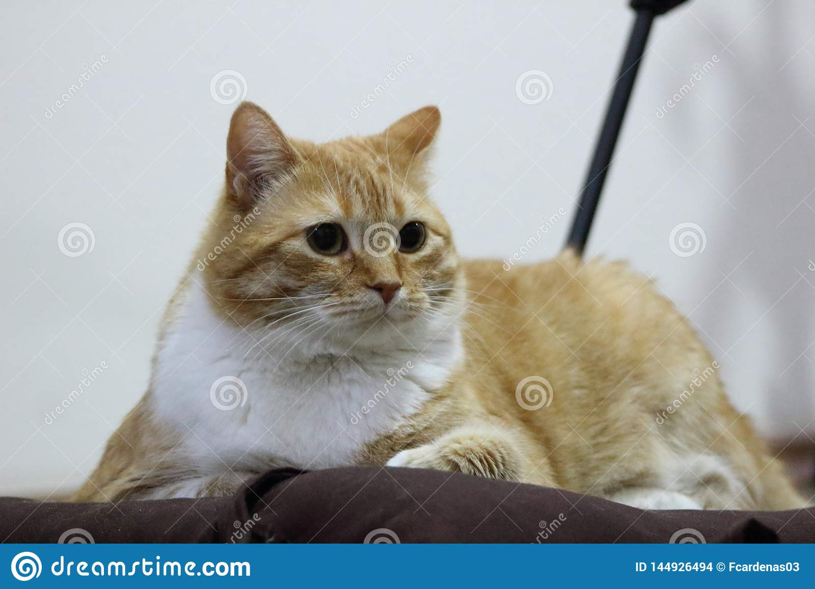 Kat die thuis na een grote dag van de jacht rusten