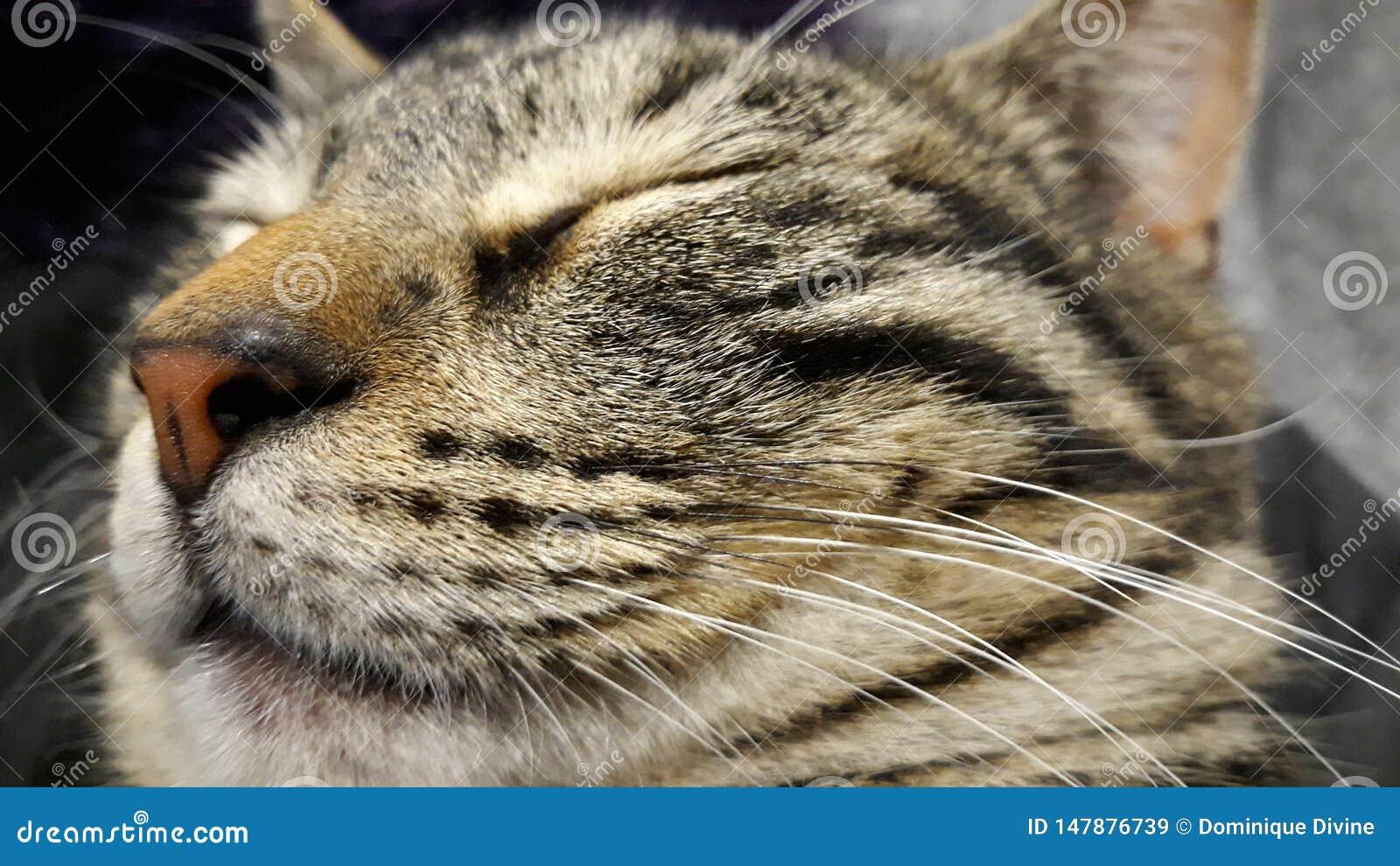 Kat in diepe slaap