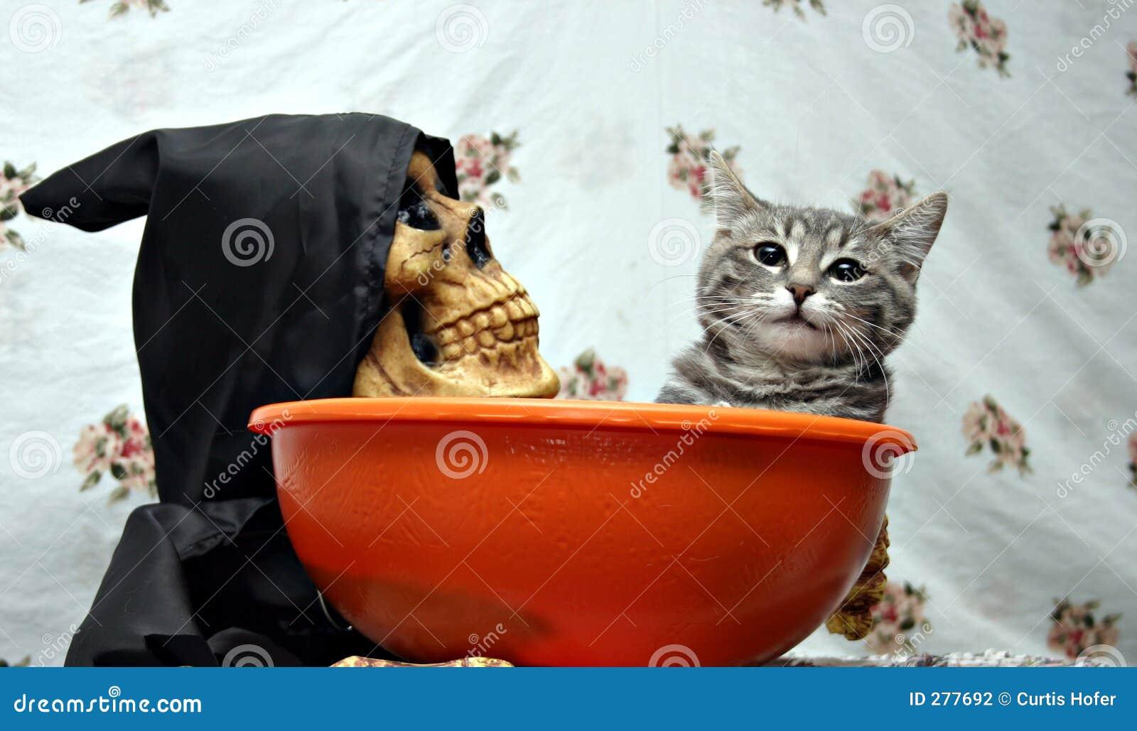 Kat in een suikergoedschotel