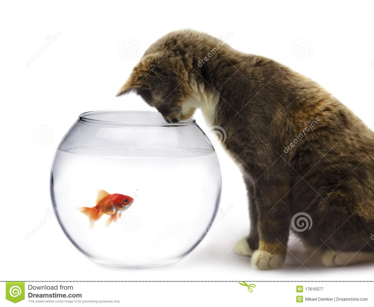 Cat In Fishbowl Where S The Fish