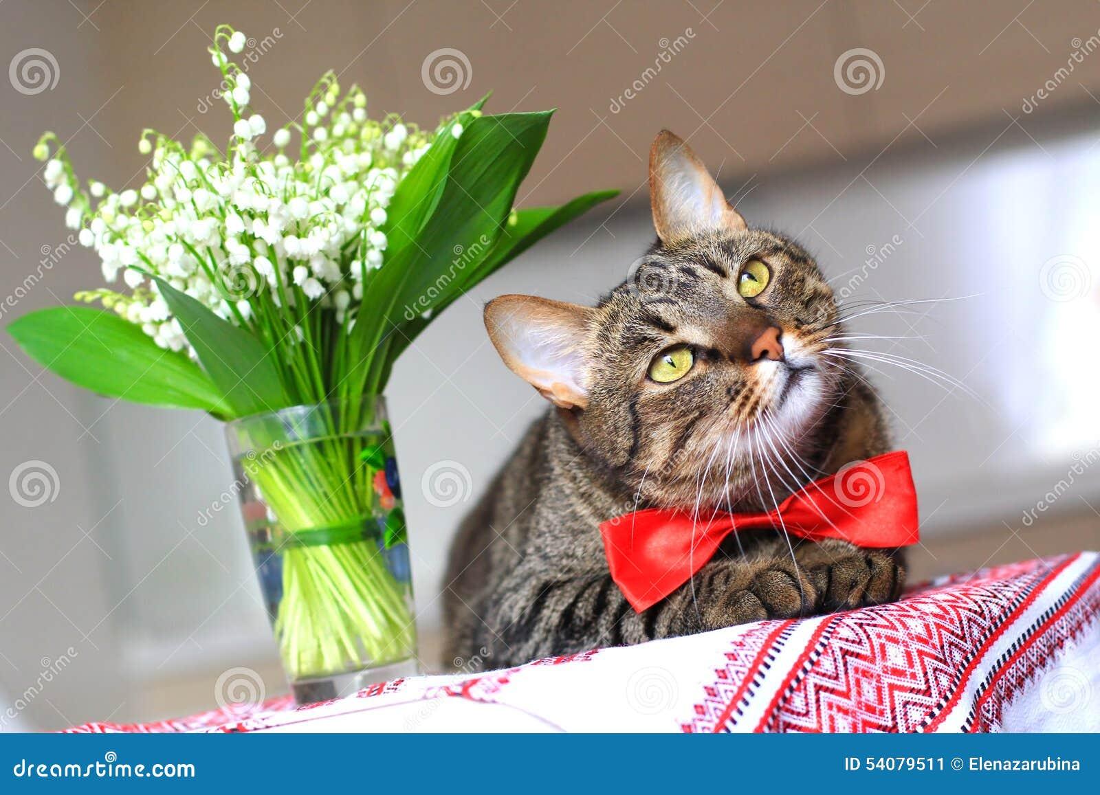 Kat en lelietje-van-dalen