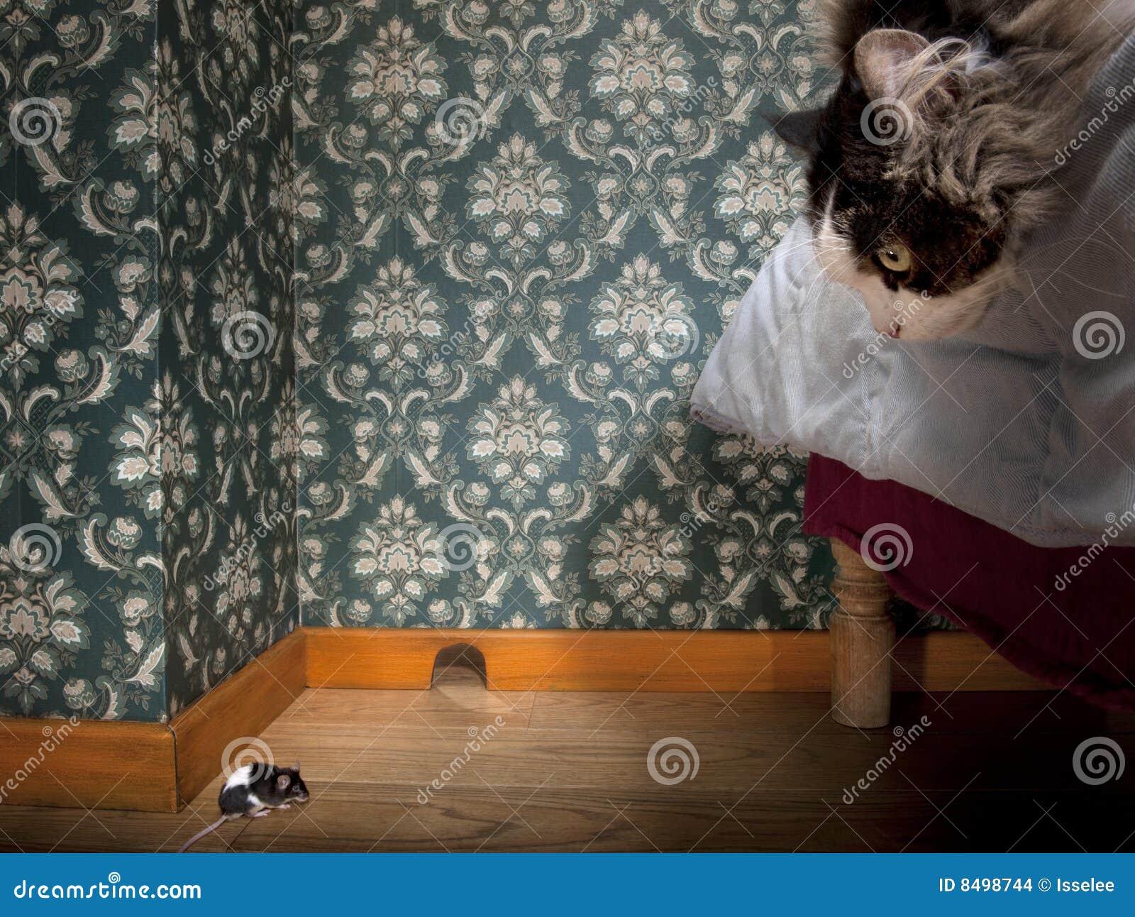 Kat en muis in een luxe ouderwetse ruimte stock foto afbeelding 8498744 - Kind ruimte luxe ...