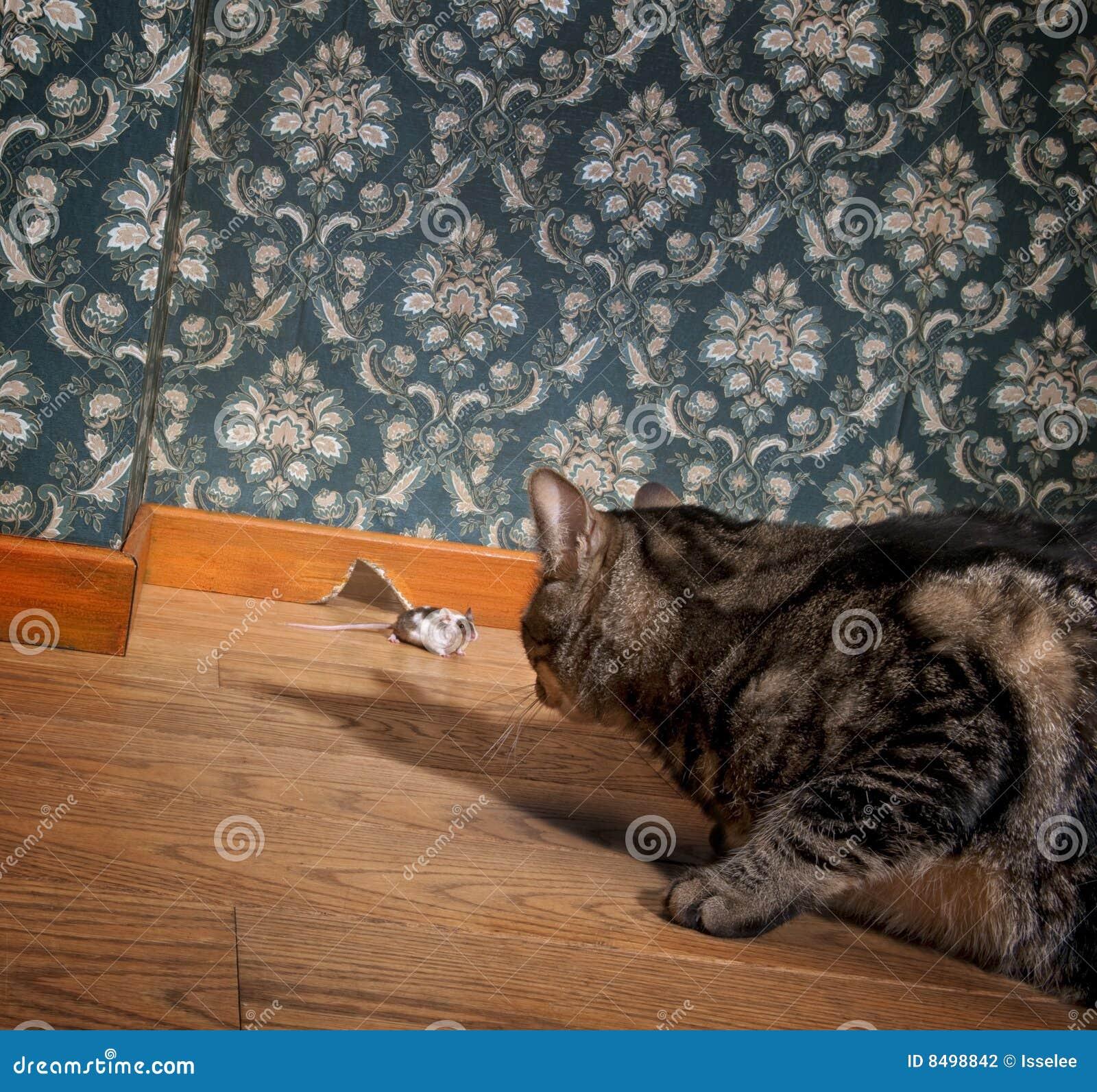 Kat en muis in een luxe ouderwetse ruimte stock fotografie afbeelding 8498842 - Kind ruimte luxe ...