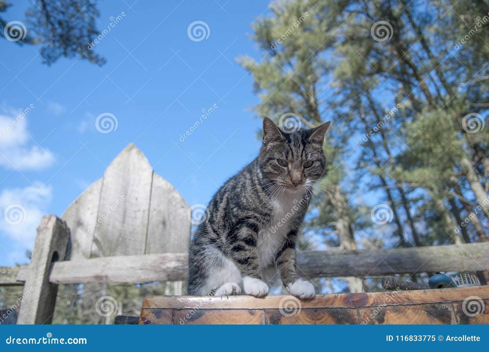 Kat en Omheining