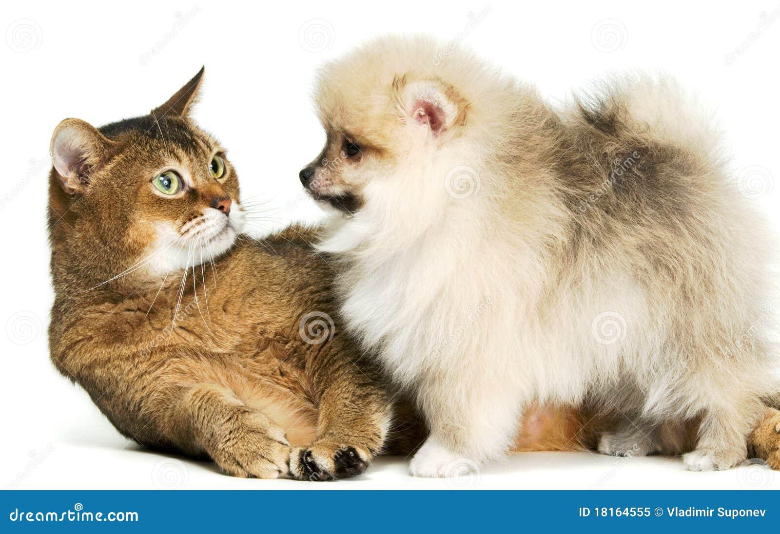 Kat en puppy