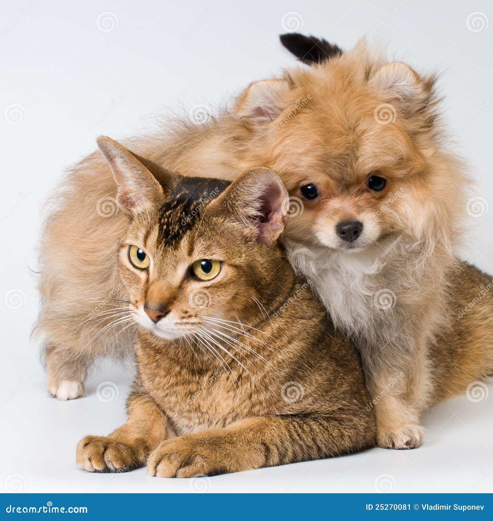 Kat en puppy in studio