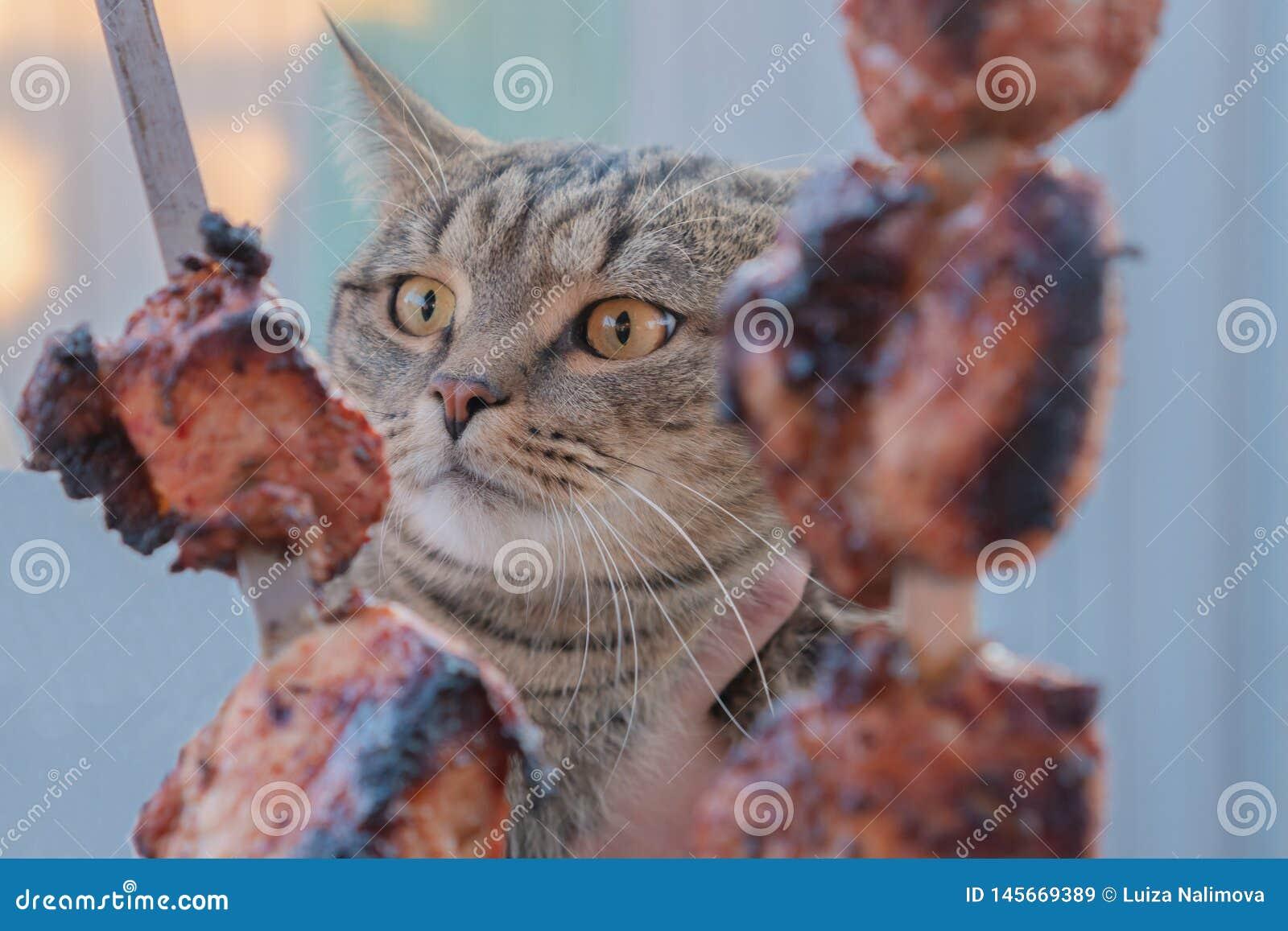 Kat en vlees