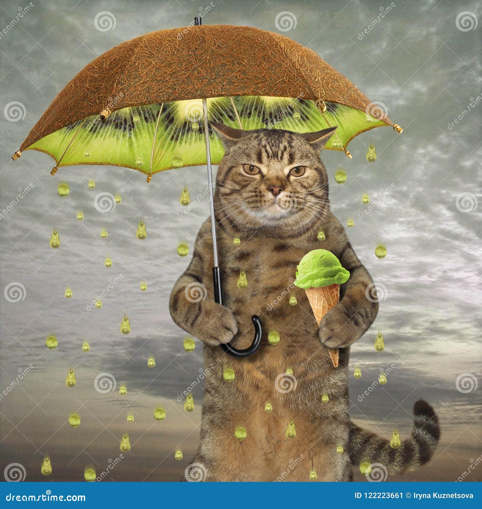 Kat met een kiwiparaplu