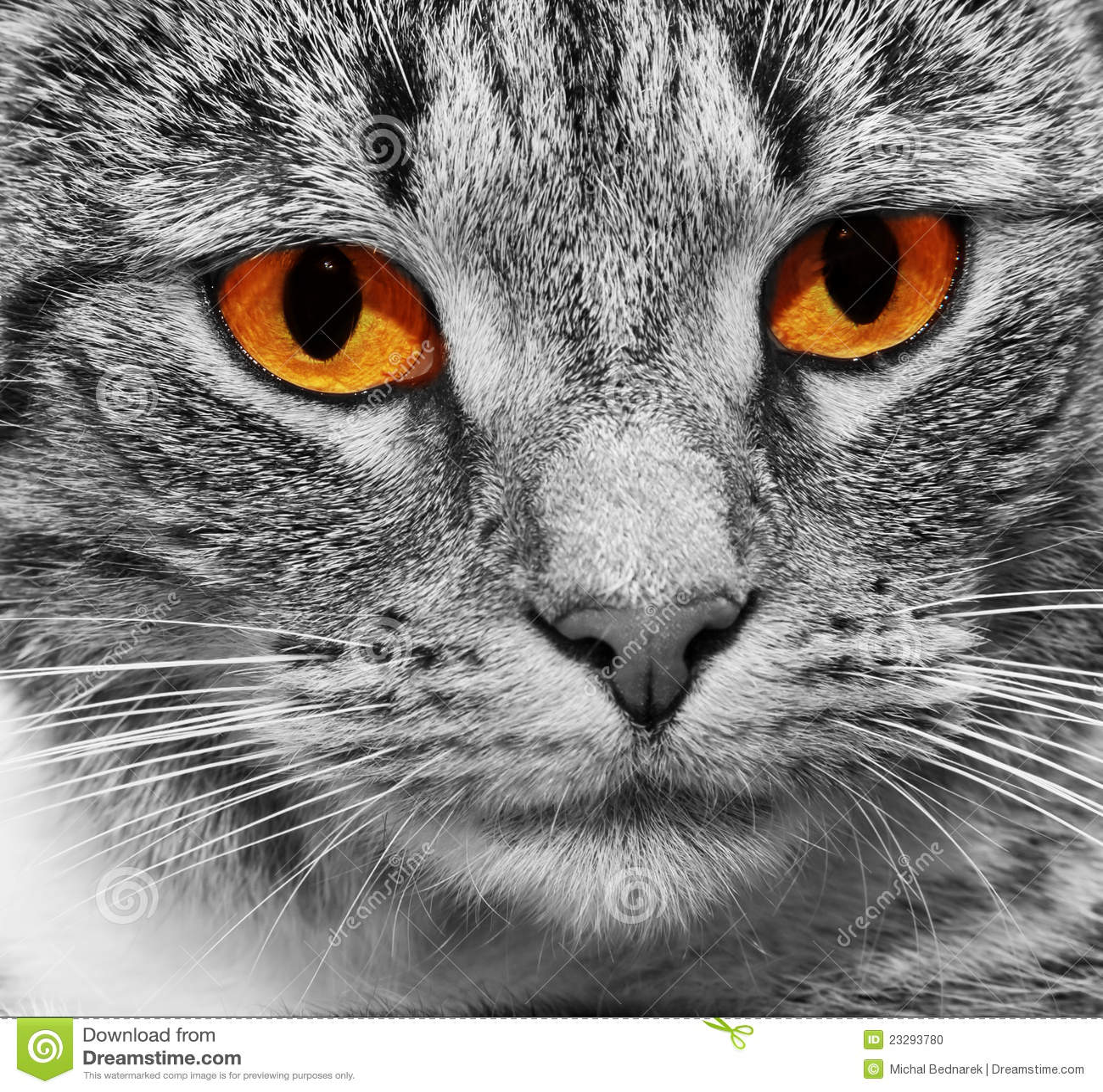 Kat met enge rode gloeiende ogen stock foto afbeelding 23293780 - Ogen grappig ...