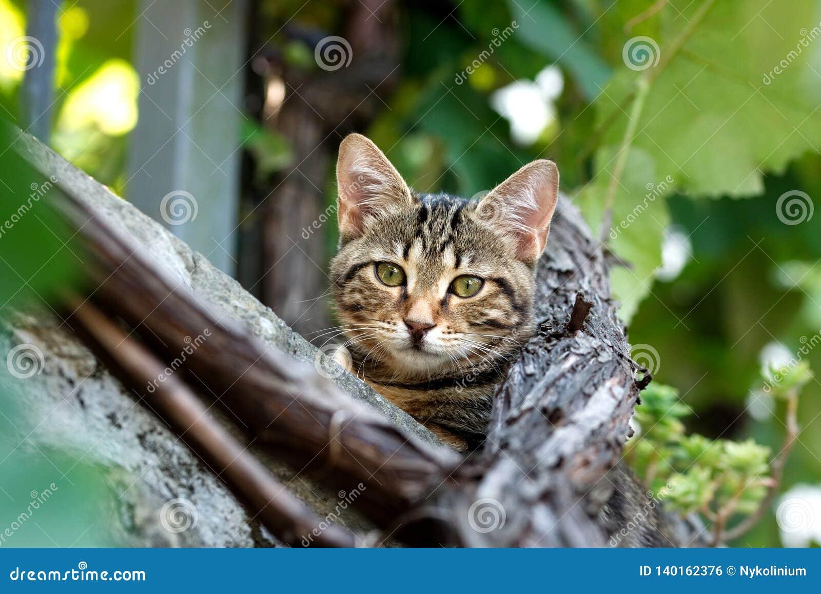 Kat met groene ogen binnen - tussen de wijnstokken