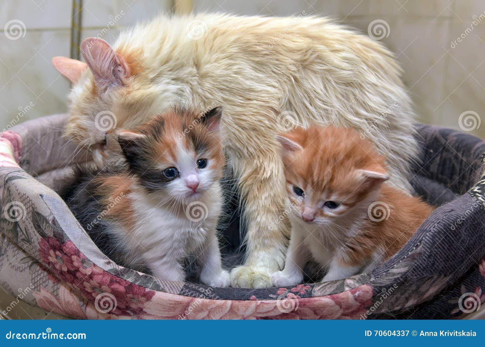 Kat met katjes