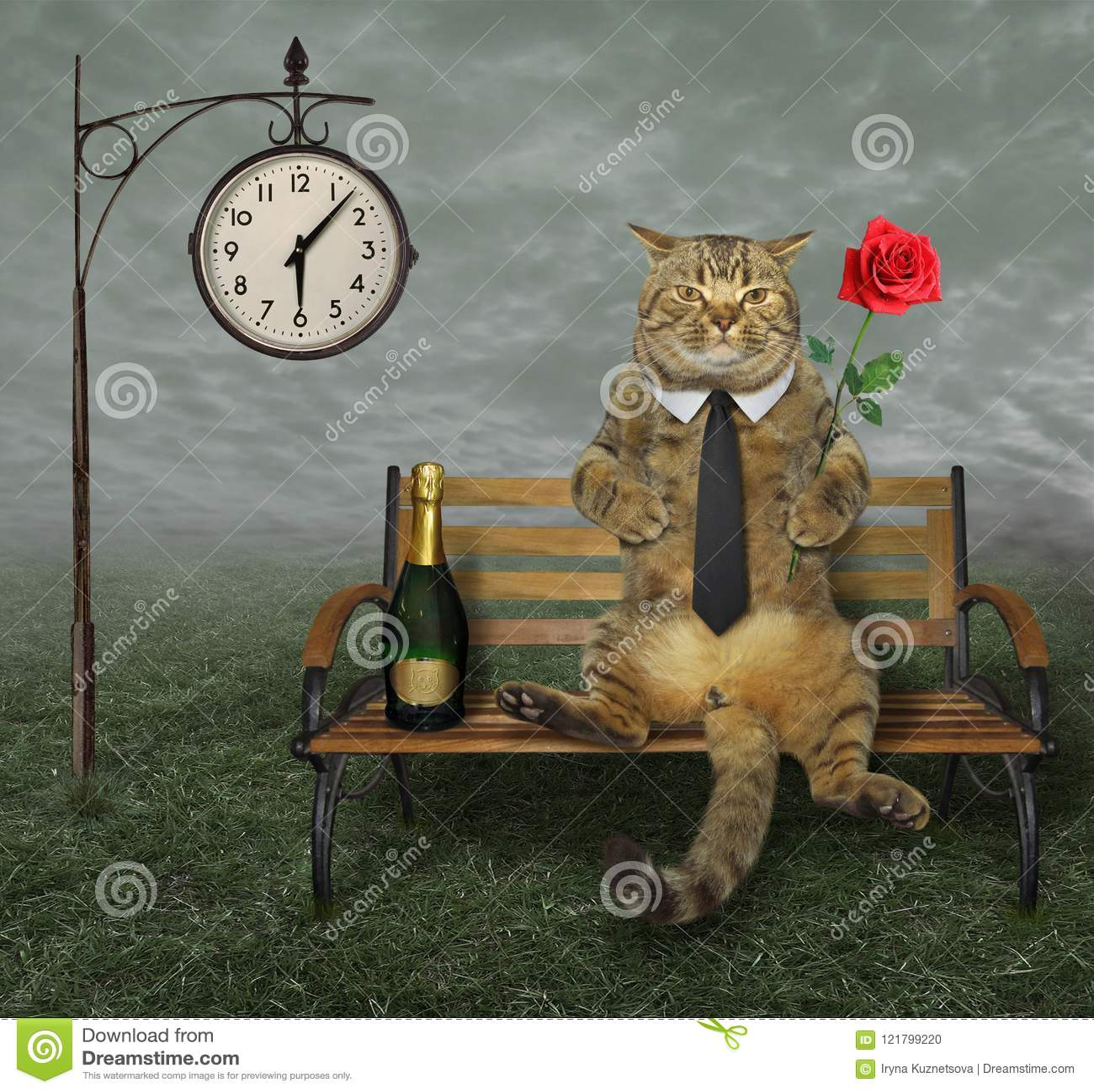 Kat met wijn op bank