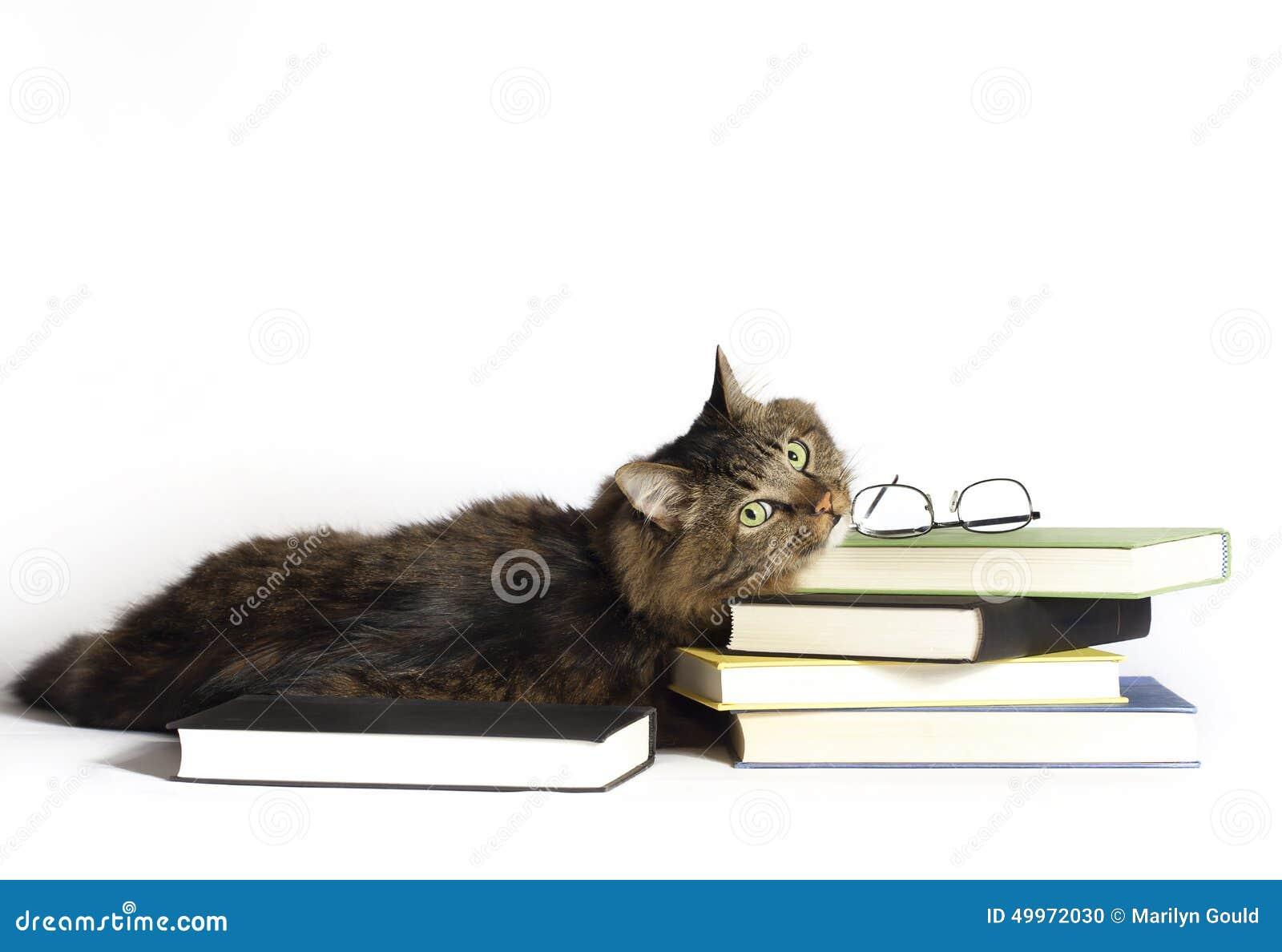 Kat op boeken