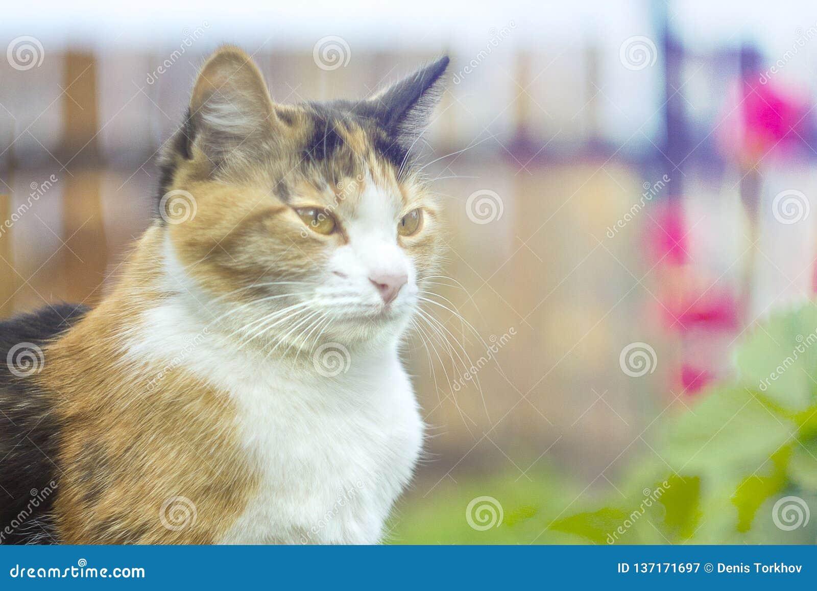 Kat op een achtergrond van bloemen met bokeheffect, bij zonsondergang