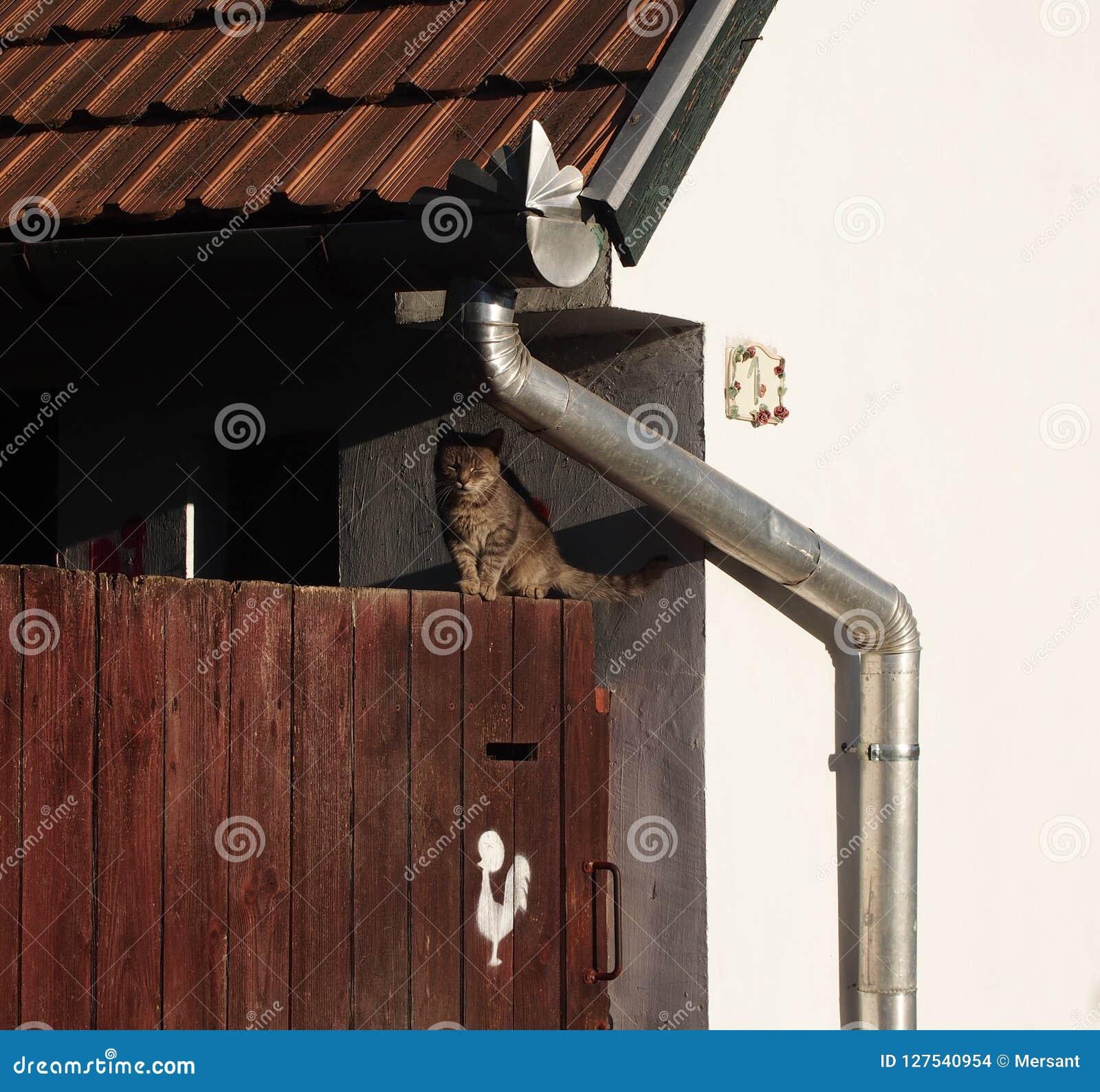 Kat op een omheining