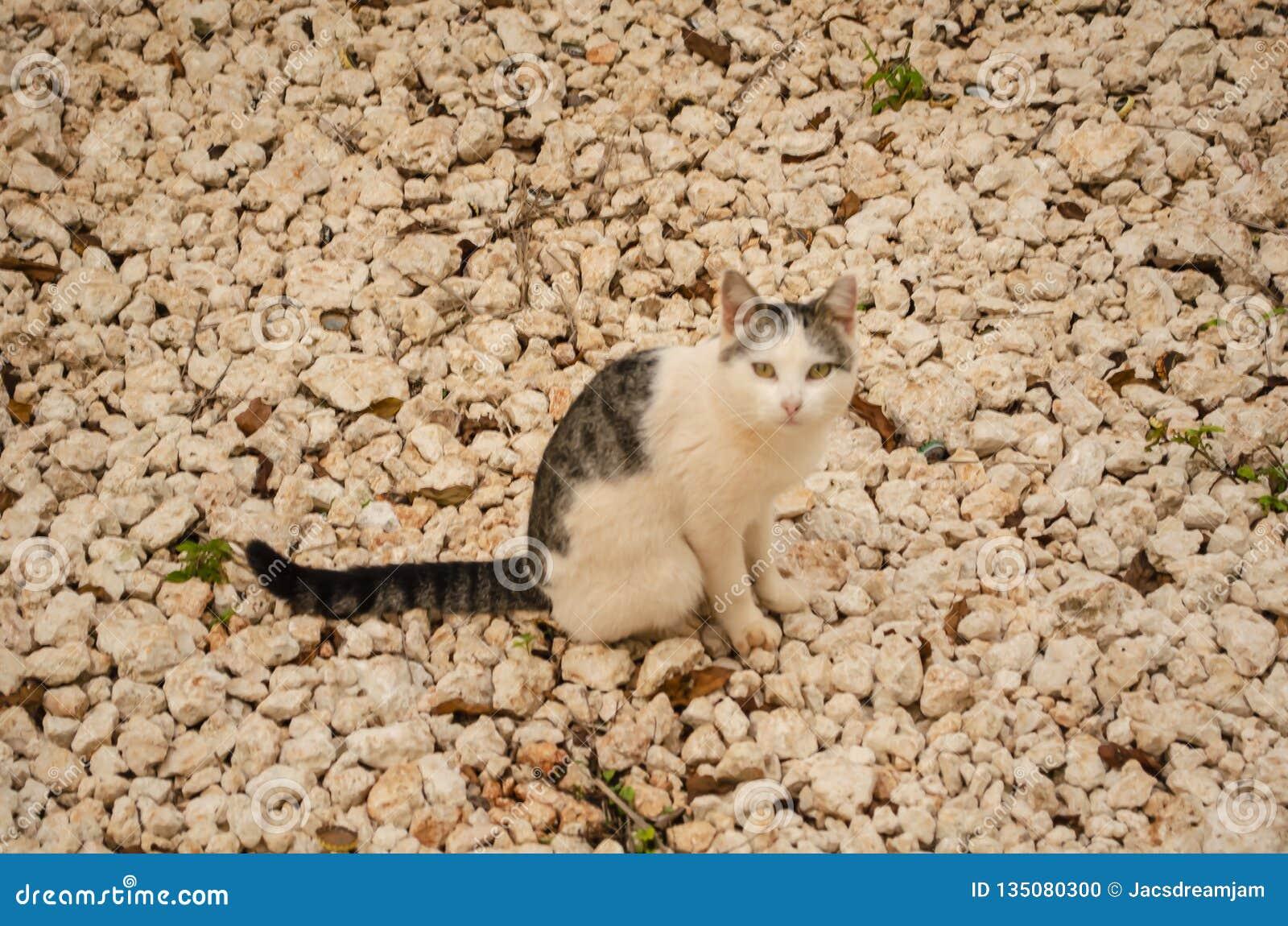 Kat op Stenen