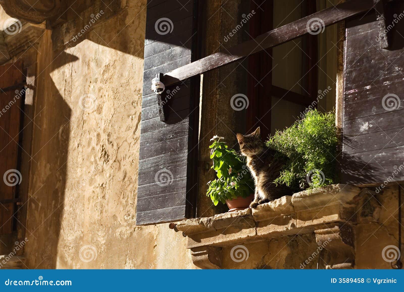 Kat op venster