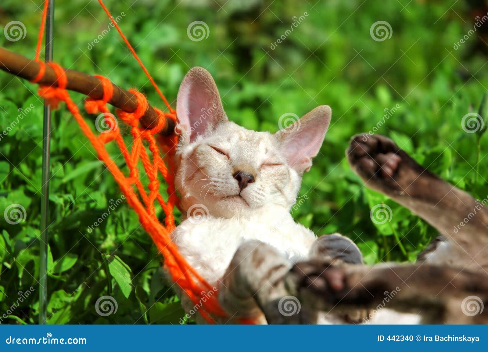 Kat op weekend