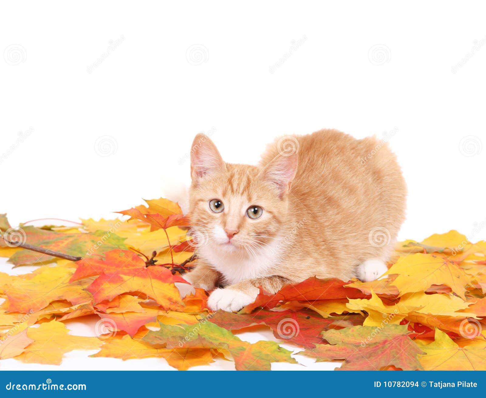 Kat op wit