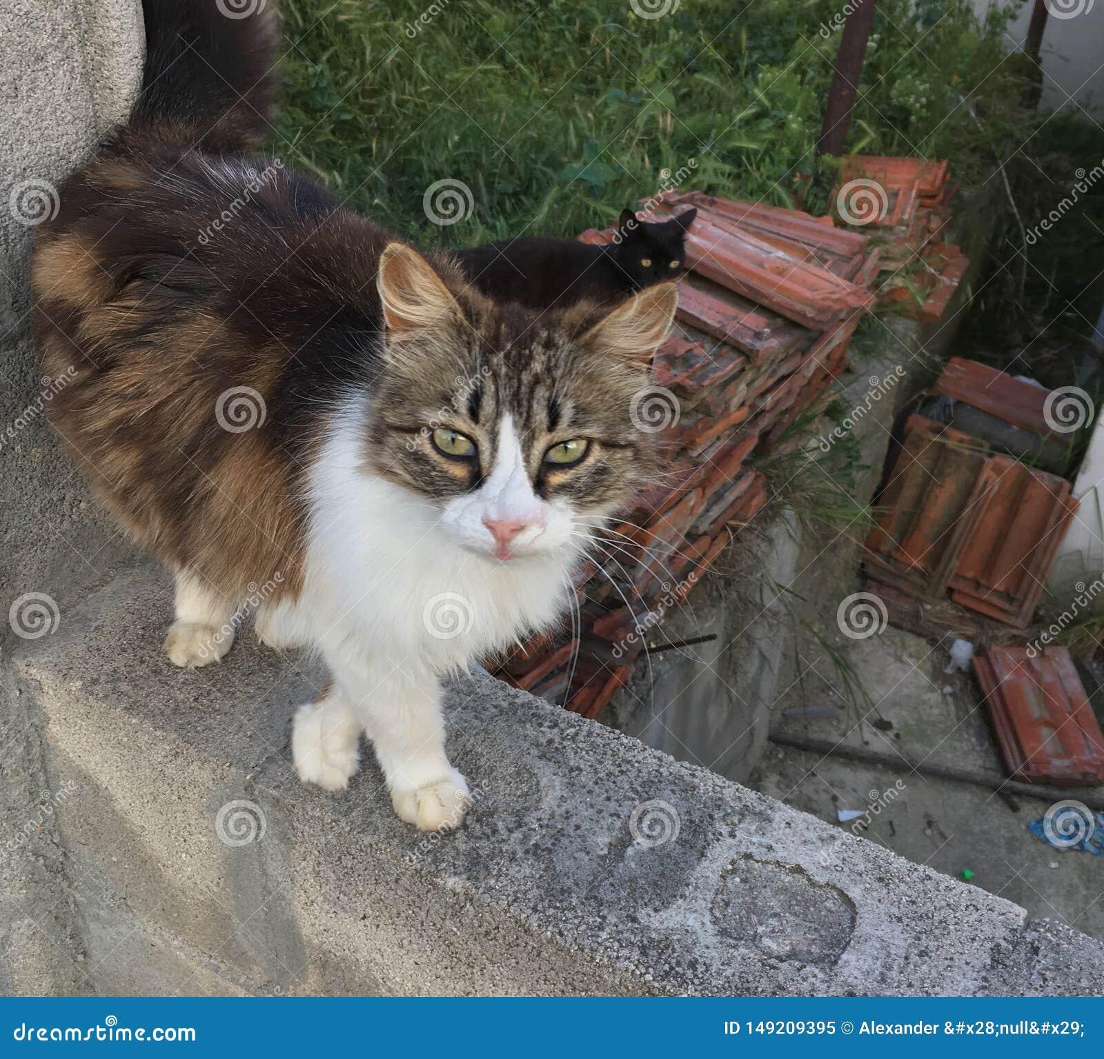 Kat in openlucht